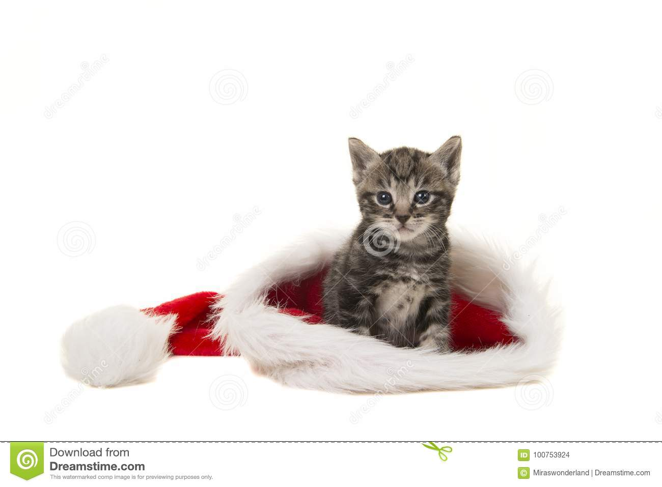 Tabby Baby Cat Sitting In Santa S Hat Isolated On A White