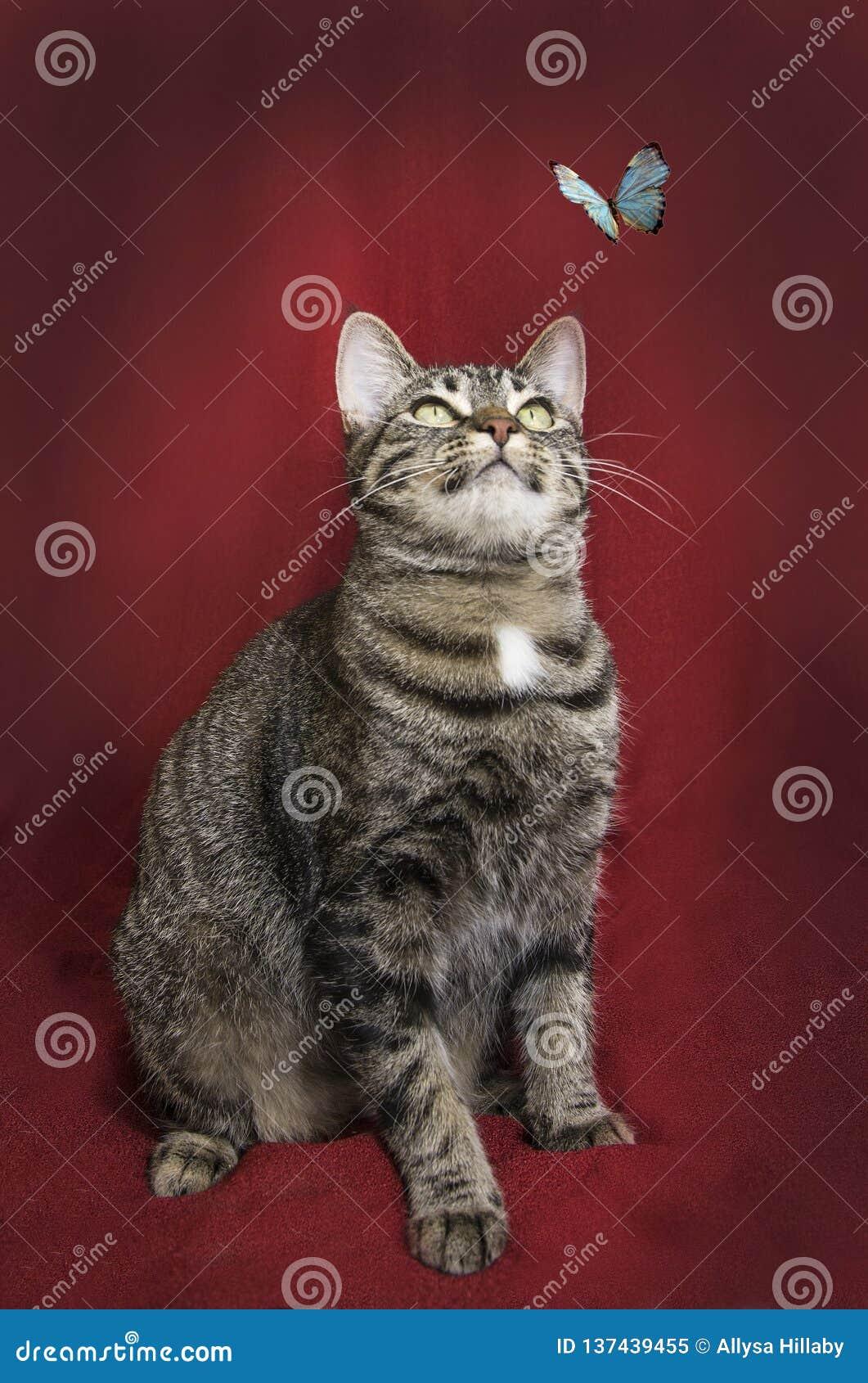 Tabby Cat auf rotem Hintergrund