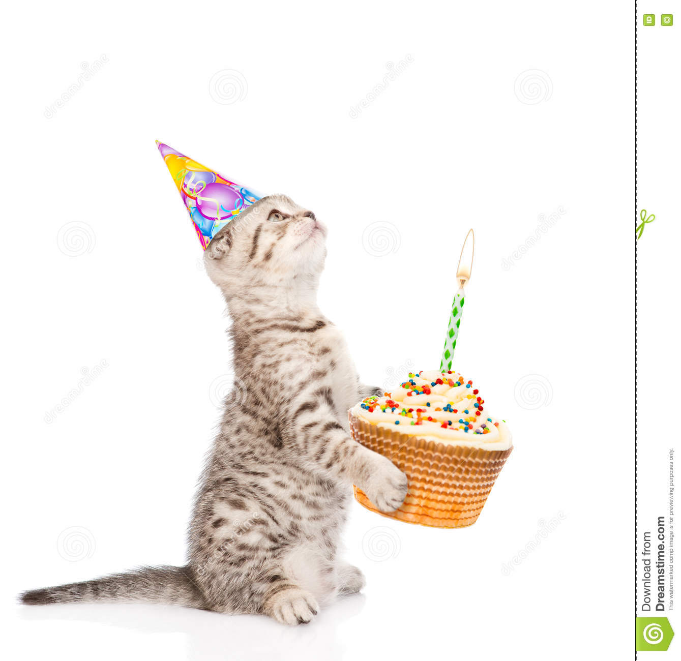 Tabby Cat In Birthday Hat Holding Cake With Candles Isolated On White Background Royalty
