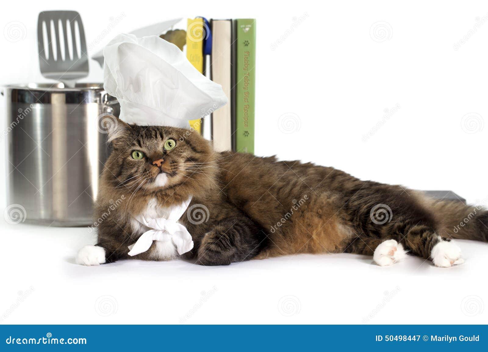 Cat Chef Hat