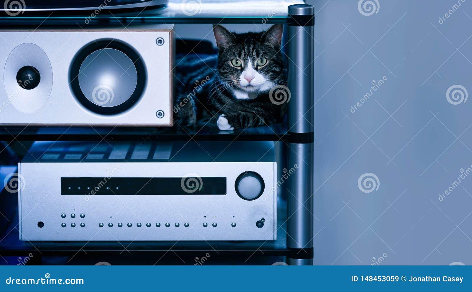 Tabby Cat con el Presidente en el estante de alta fidelidad