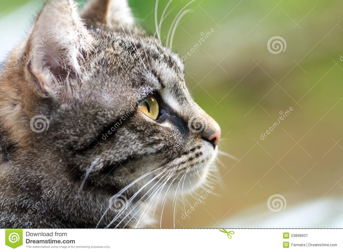 stare map with Stock Photo Tabby Cat Head Profile Close Up Copy Space Portrait Against Green Brown Background Image53898937 on Stock Photo Tabby Cat Head Profile Close Up Copy Space Portrait Against Green Brown Background Image53898937 furthermore Royalty Free Stock Images Walrus Cartoon Image25901119 also 18 Foot Python Captured Florida Everglades further Stock Image Old Farmers Threshing Wheat Animals Vintage Country House Two Girls Looking Work Image35693491 in addition Royalty Free Stock Image Usa National Flag Image5169146.