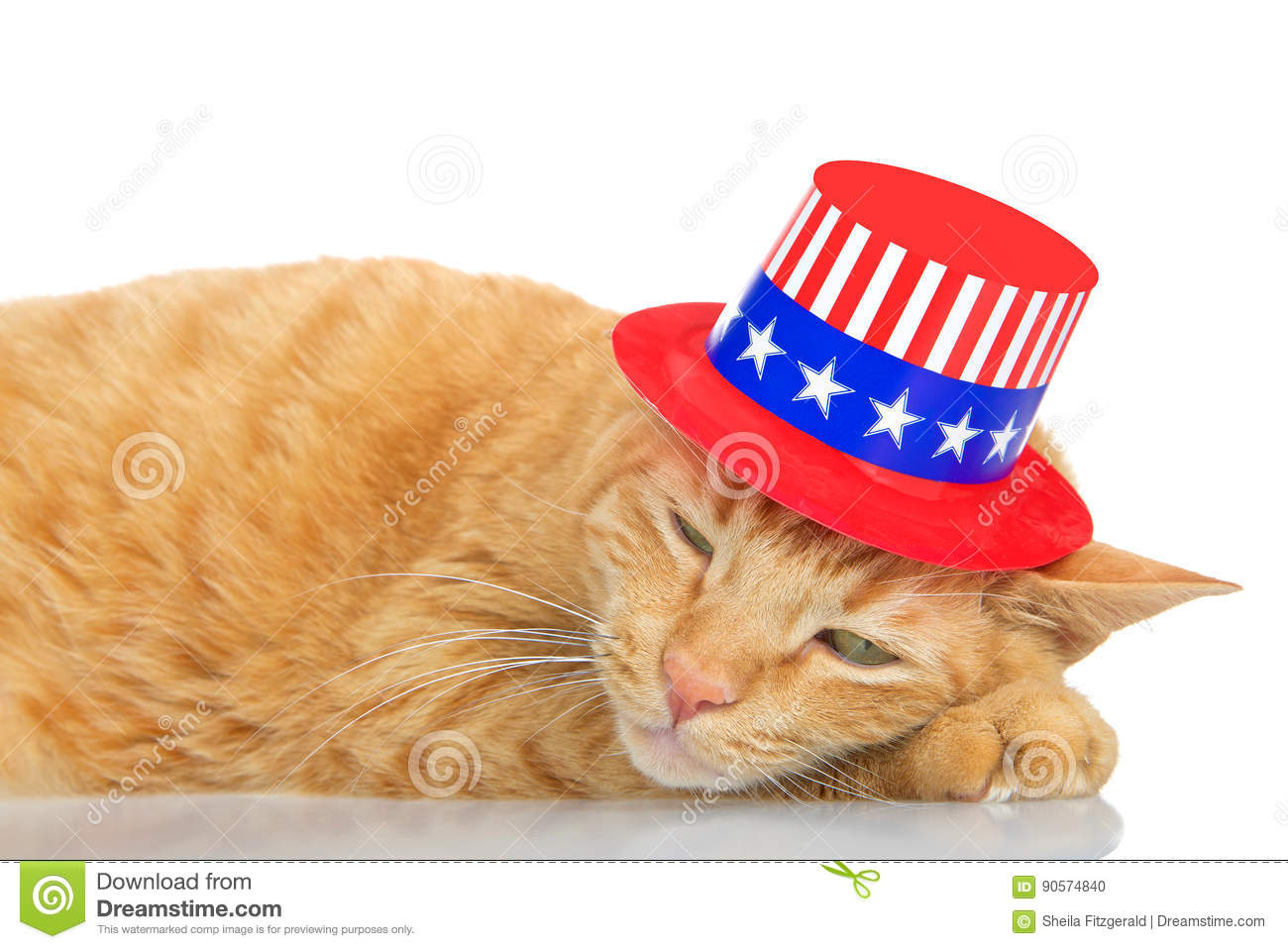 foto de Tabby Cat Laying On Reflective Surface Wearing Patriotic