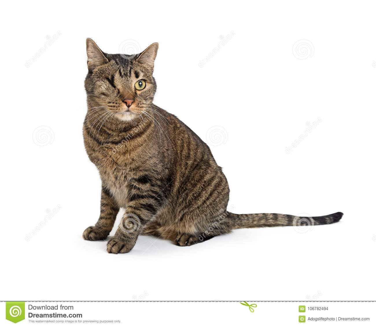 Tabby Cat With Missing Eye