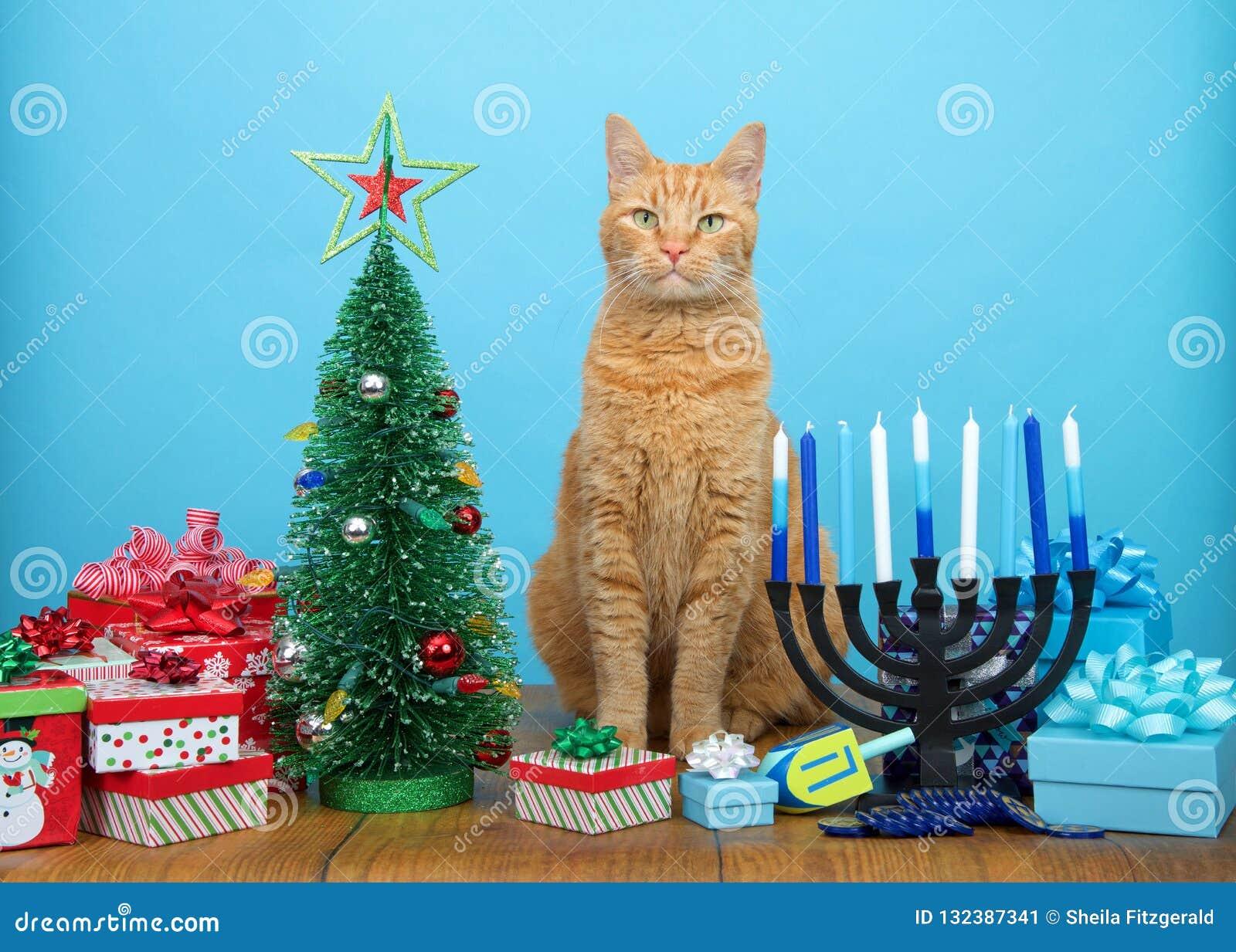 Tabby cat sitting between Christmas and Hanukkah decorations