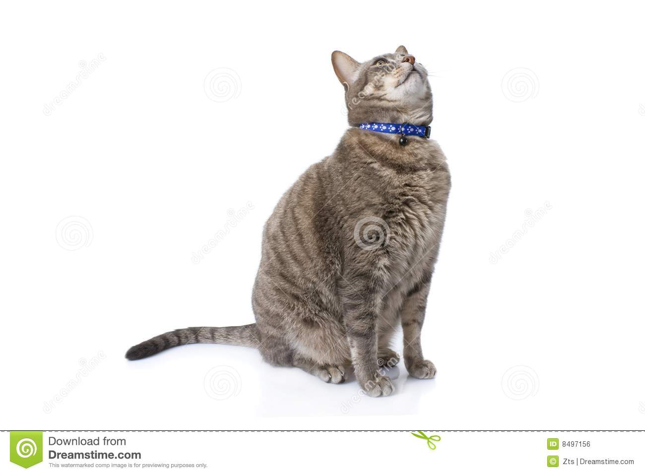 Tabby Cat Sitting And Looking Up Royalty Free Stock Image ... Tabby Cat Sitting Up
