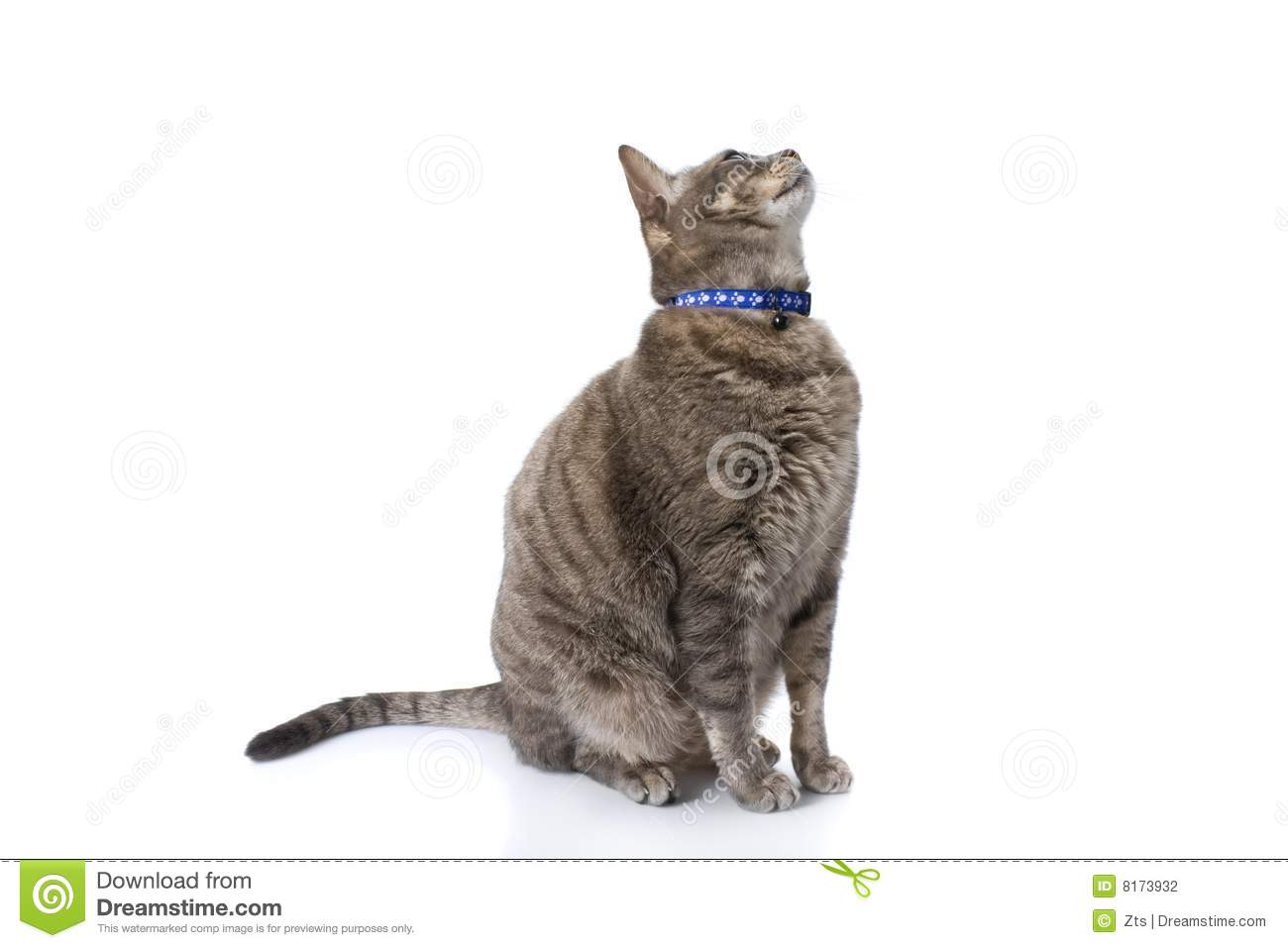 Tabby Cat Sitting And Looknig Up Stock Photography - Image ... Tabby Cat Sitting Up