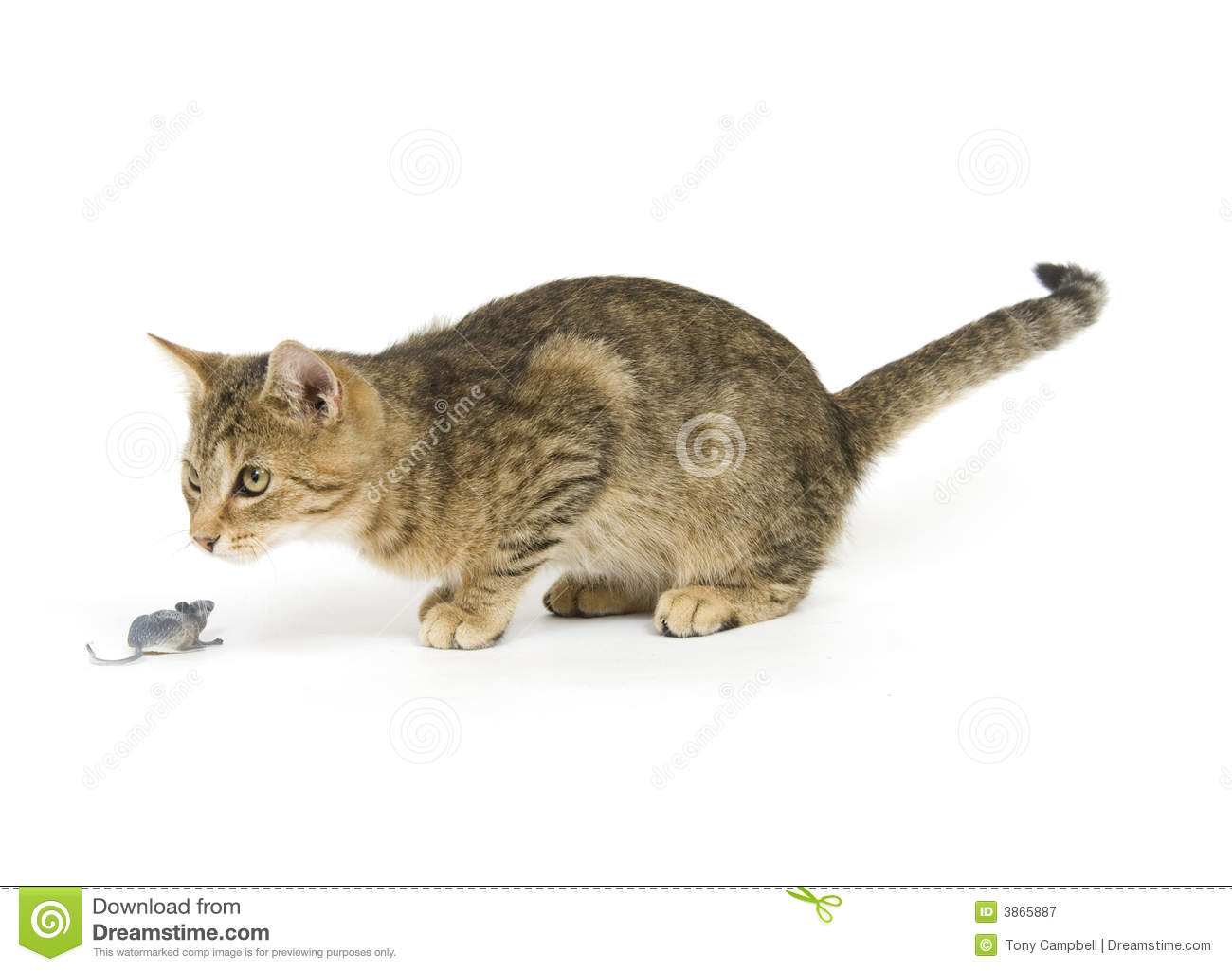 Royalty Free Cat Toy Image