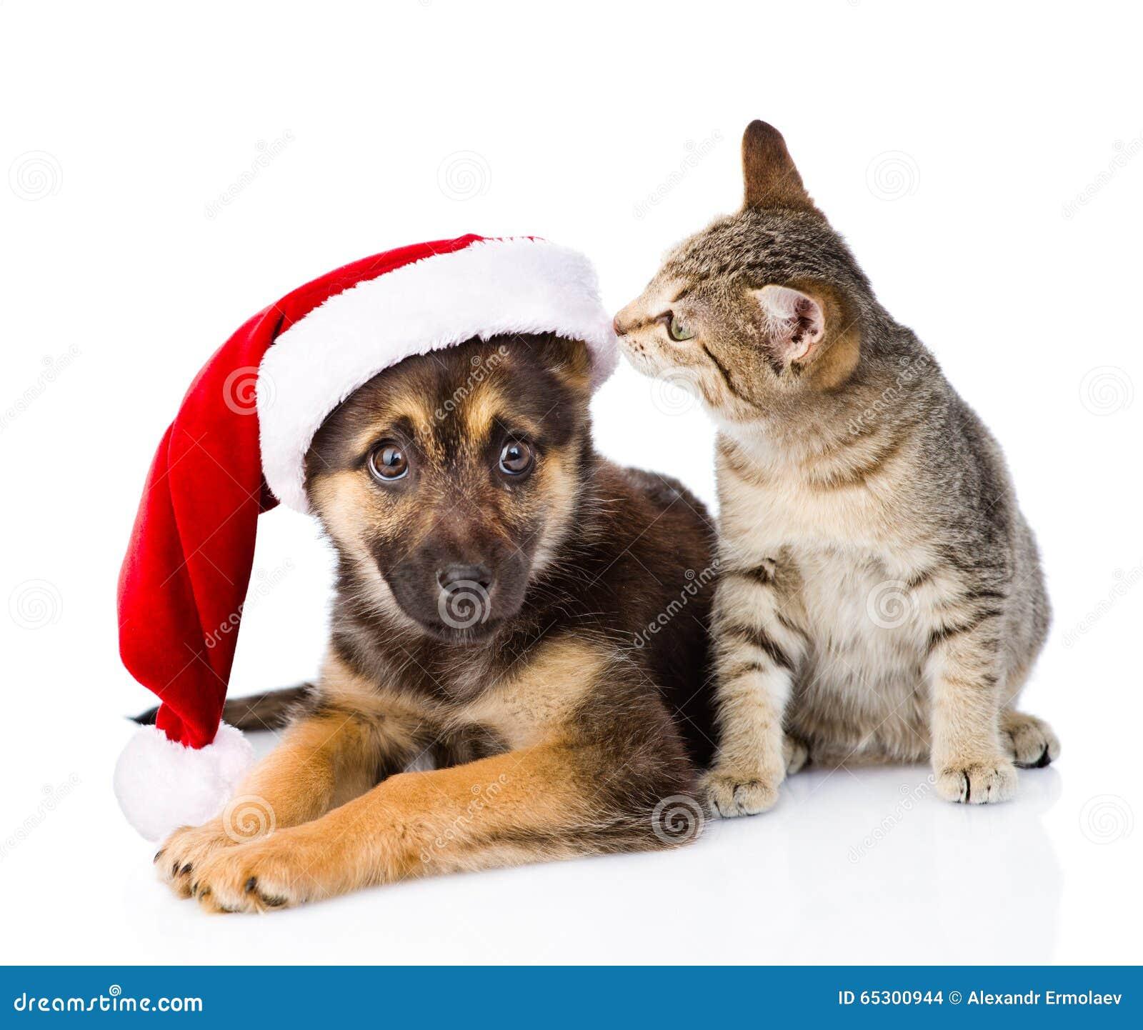 Tabby Cat und Hund mit Santa Claus-Hut auf Weiß