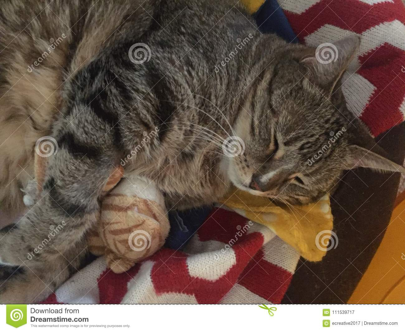 tabby diabetic boy cat resting stock image image of cats medical