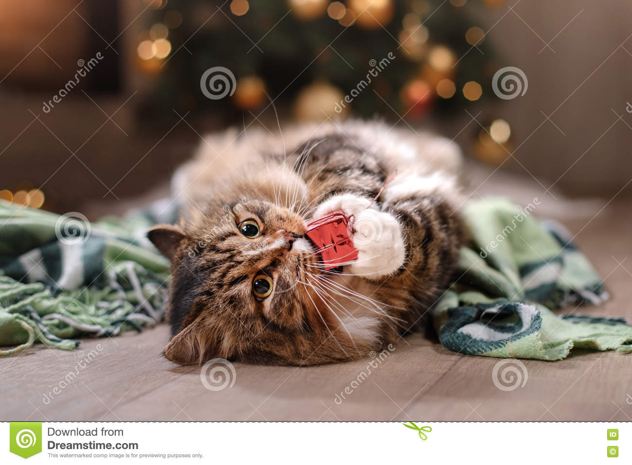 christmas cat cats animals background wallpapers on desktop