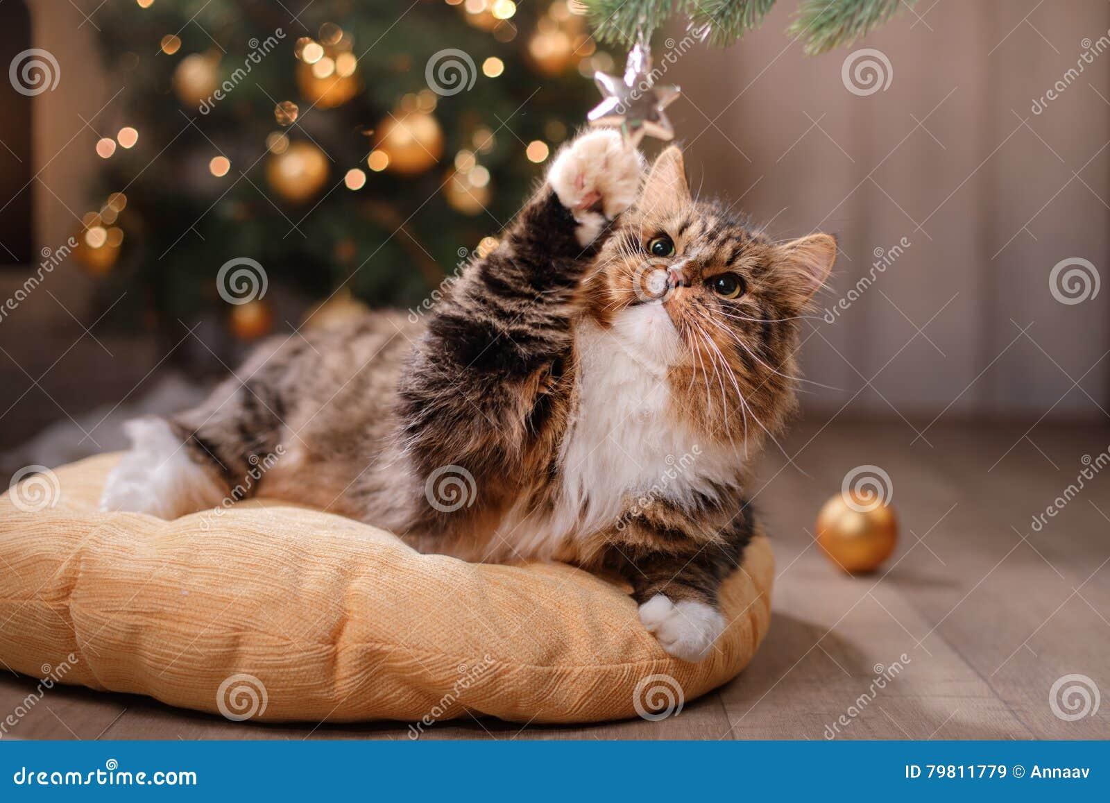Tabby i szczęśliwy kot Boże Narodzenia przyprawiają 2017, nowego rok, wakacje i świętowanie,