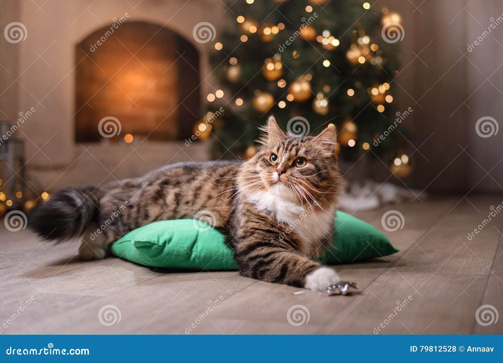Tabby i szczęśliwy kot Boże Narodzenie sezon 2017, nowy rok