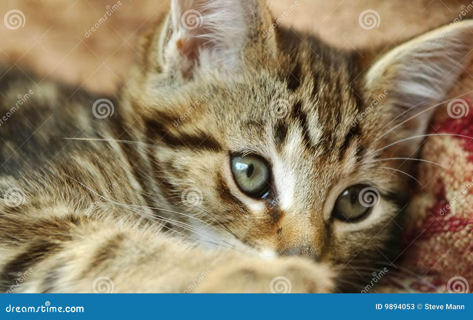 - tabby-kitten-9894053