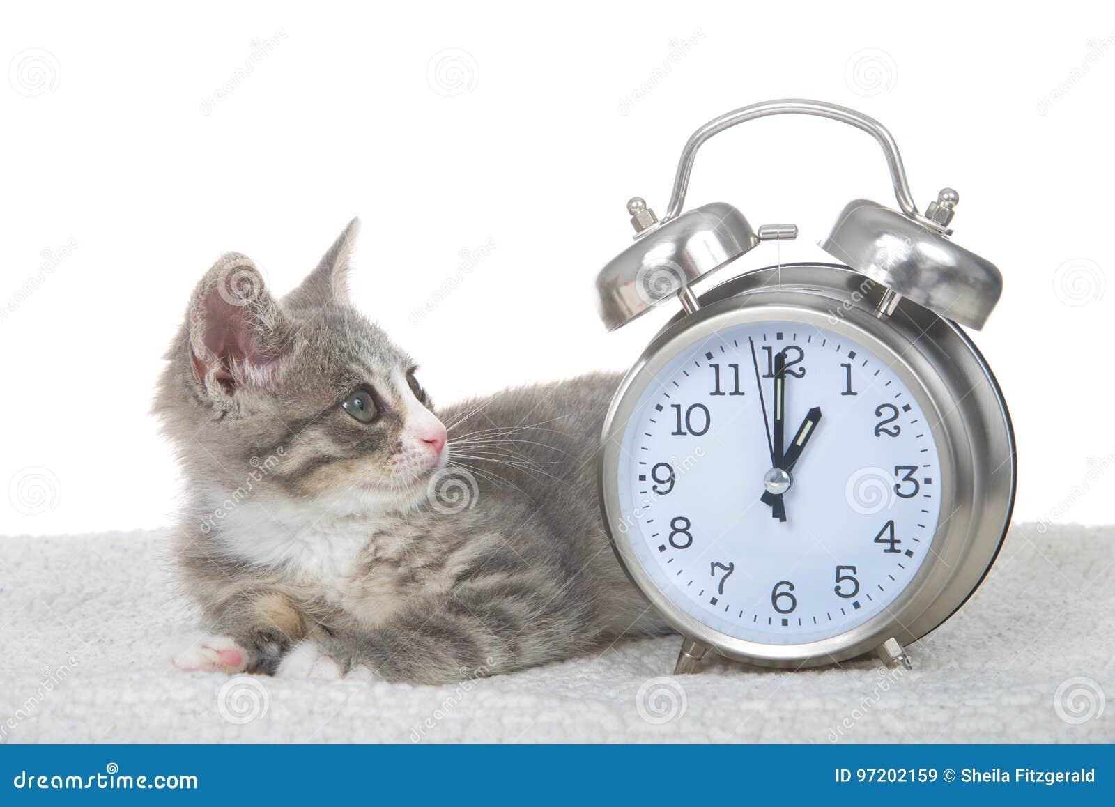 Tabby kitten laying on sheepskin blanket by clock, daylight savings concept