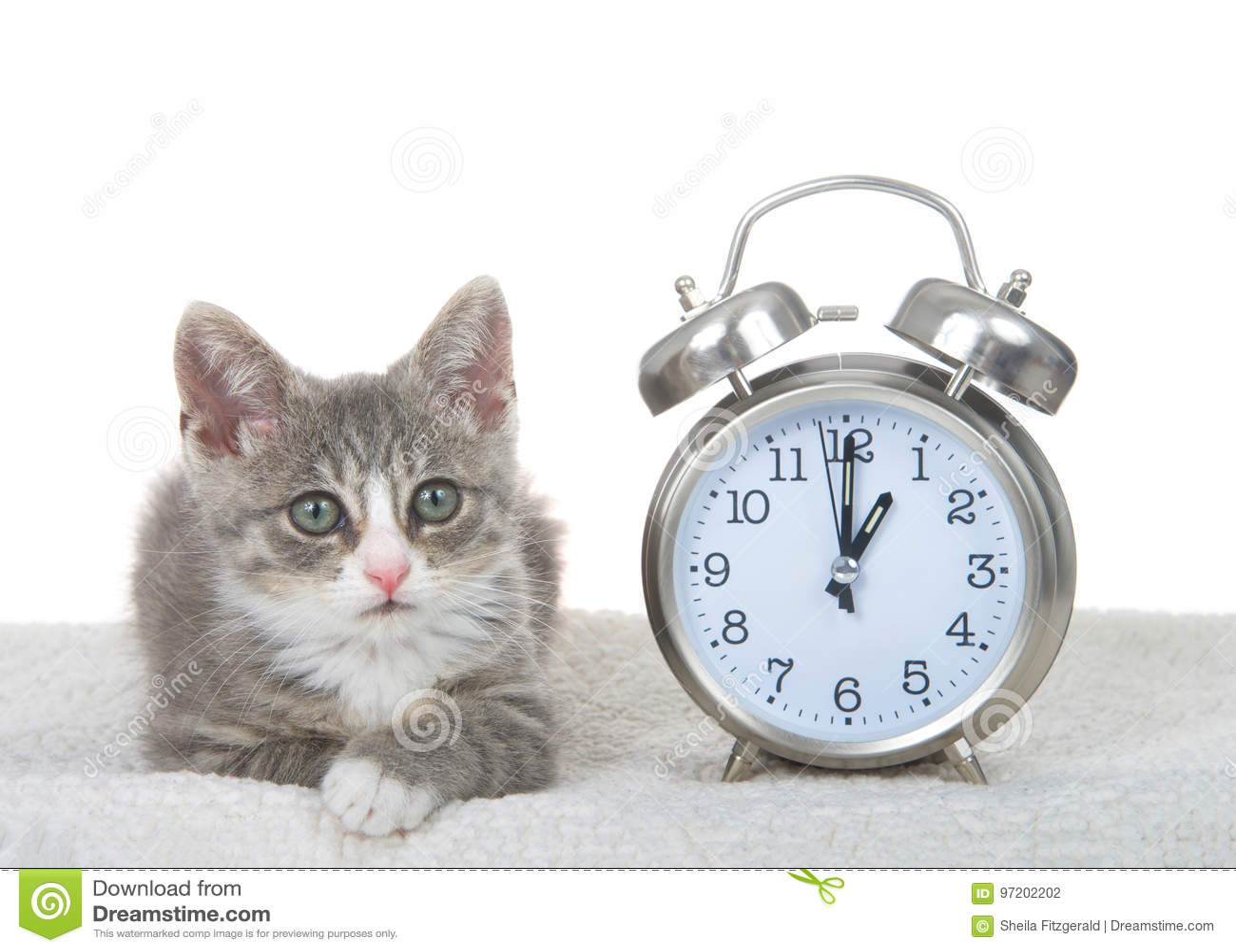 Tabby kitten next to clock on sheepskin bed, daylight savings concept