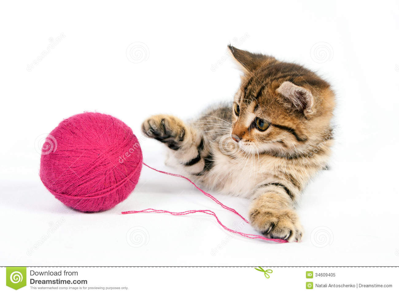 Tabby Kitten Playing With A Ball Yarn Stock Image Image