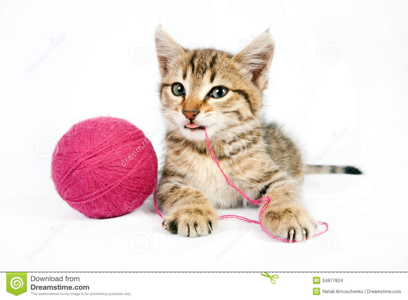 Image Gallery kitten with yarn