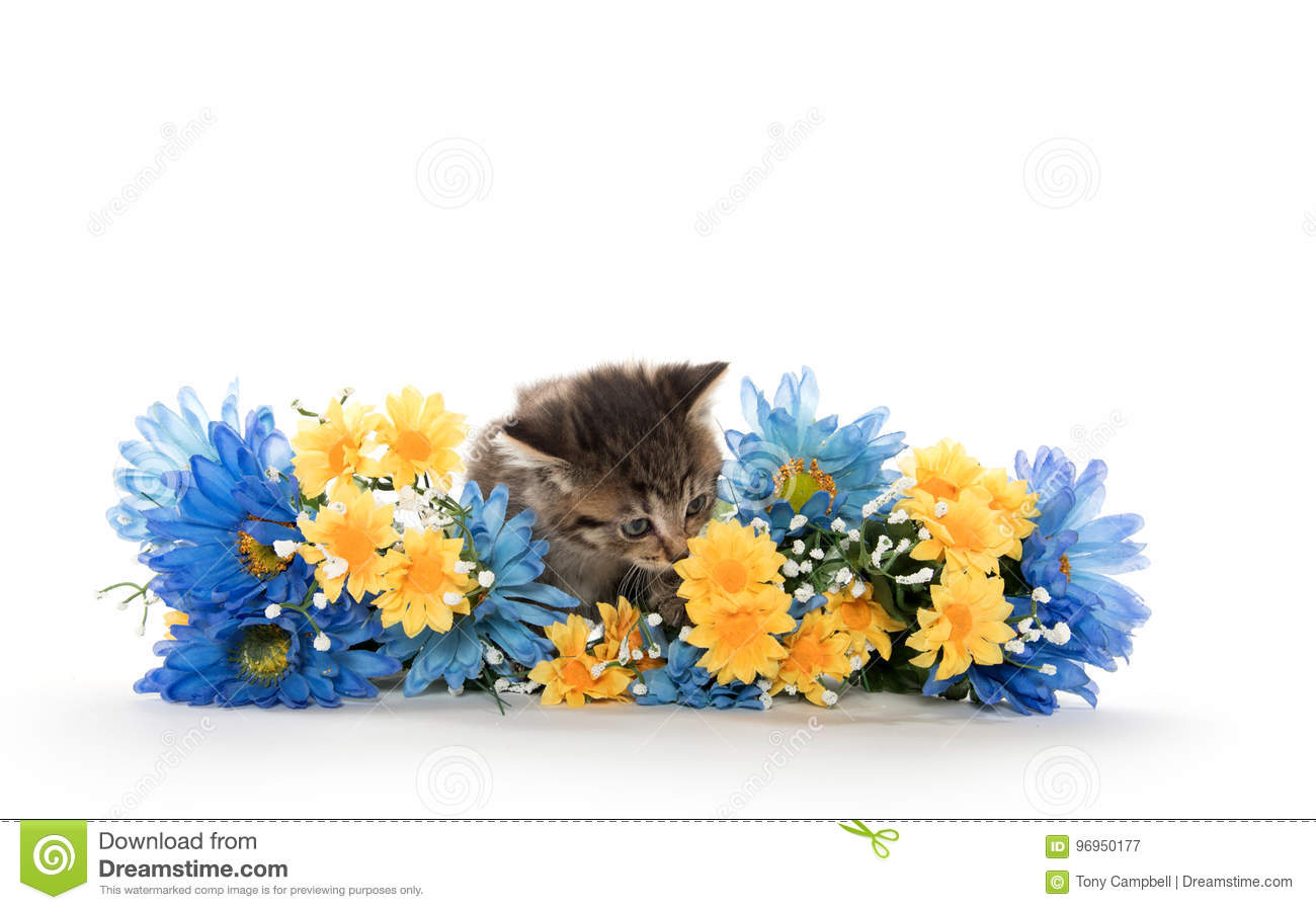 Tabby kittens with flowers stock image. Image of isolated - 96950177