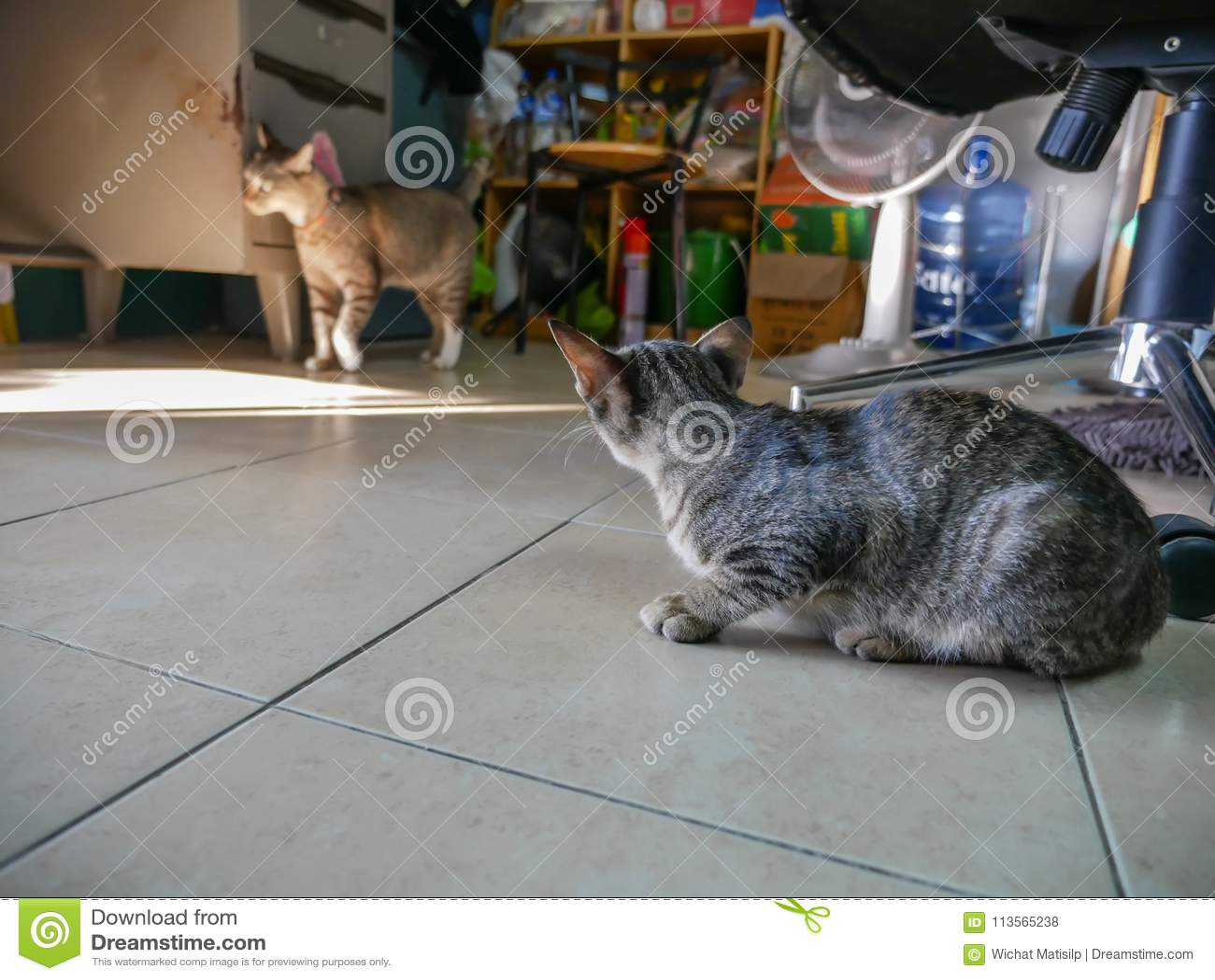 Tabby Kitty Breaking smarrita nella stanza