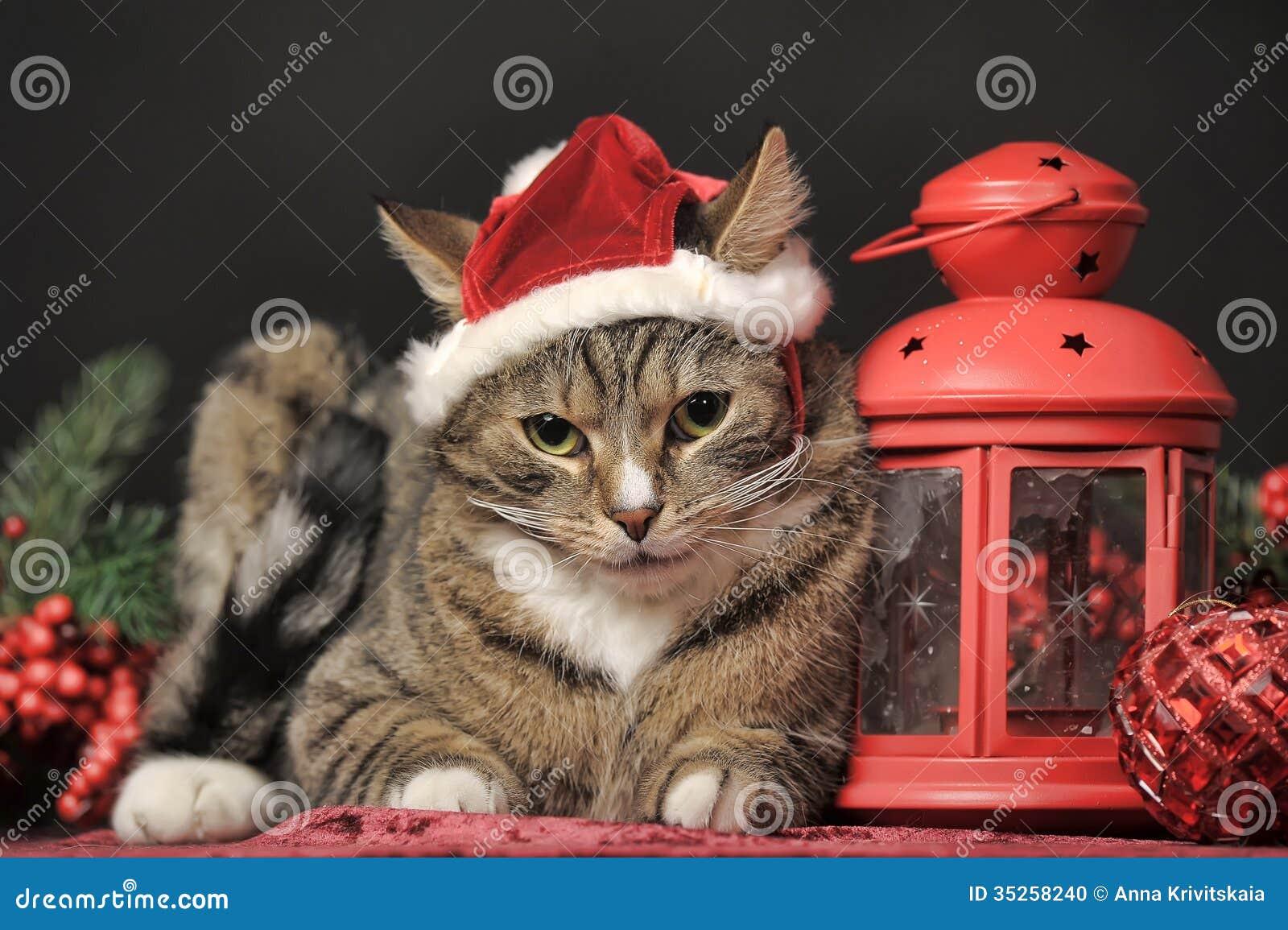 Tabby kot w Bożenarodzeniowym kapeluszu