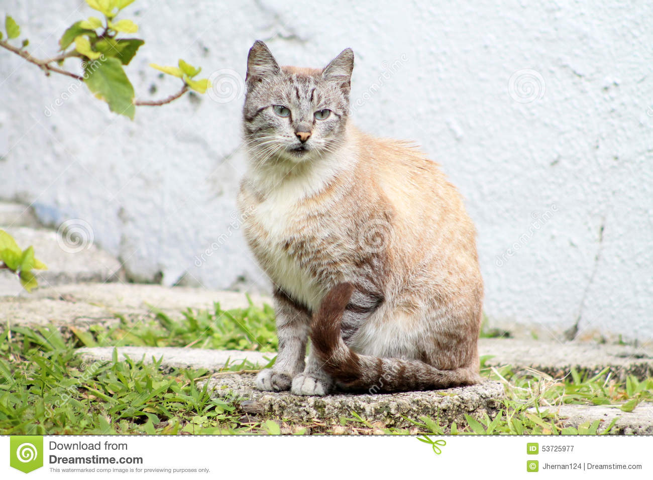Stone Cat Elevation Profile : Tabby on stepping stone stock photo image
