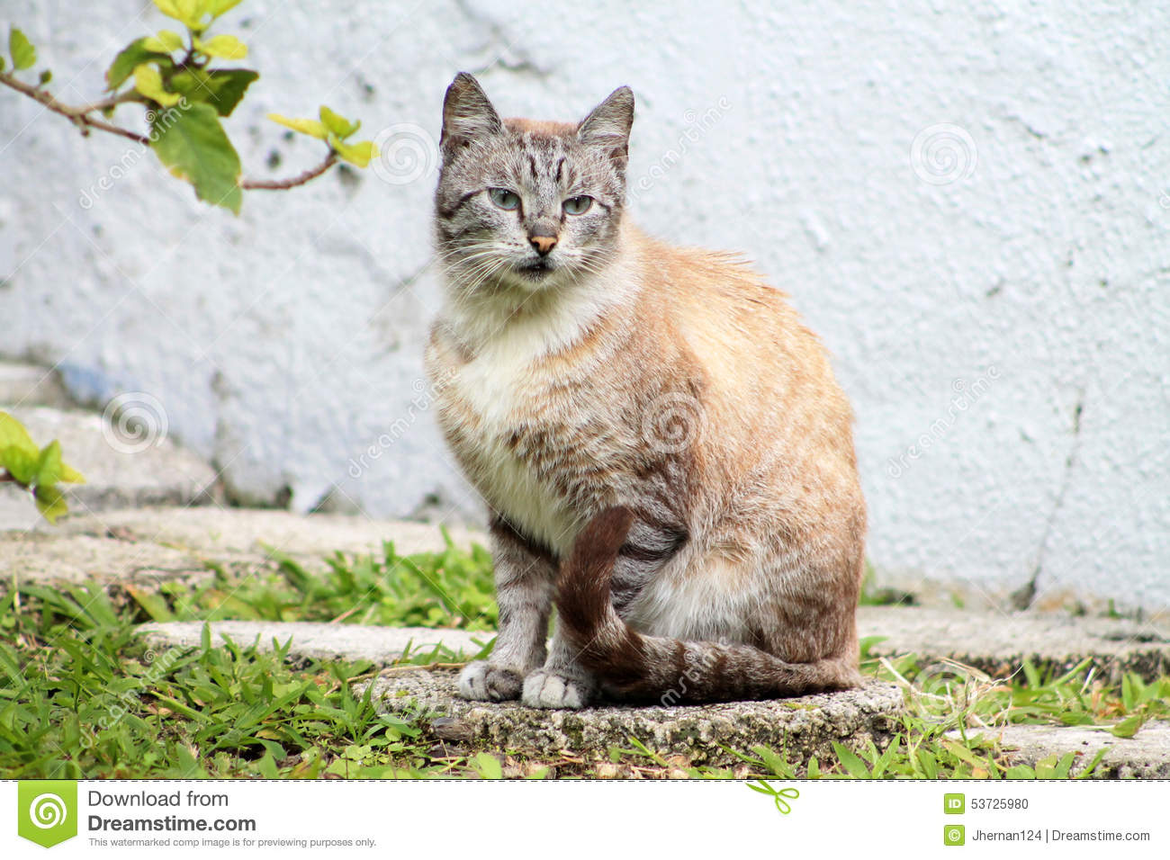 Stone Cat Elevation Profile : Tabby cat stepping out in road stock photography