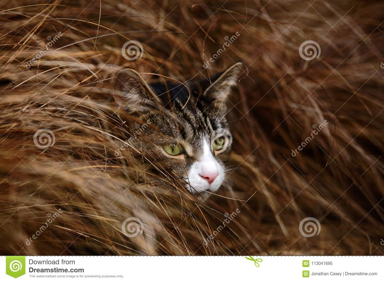 Tabby and White Cat Hiding in Long Grass