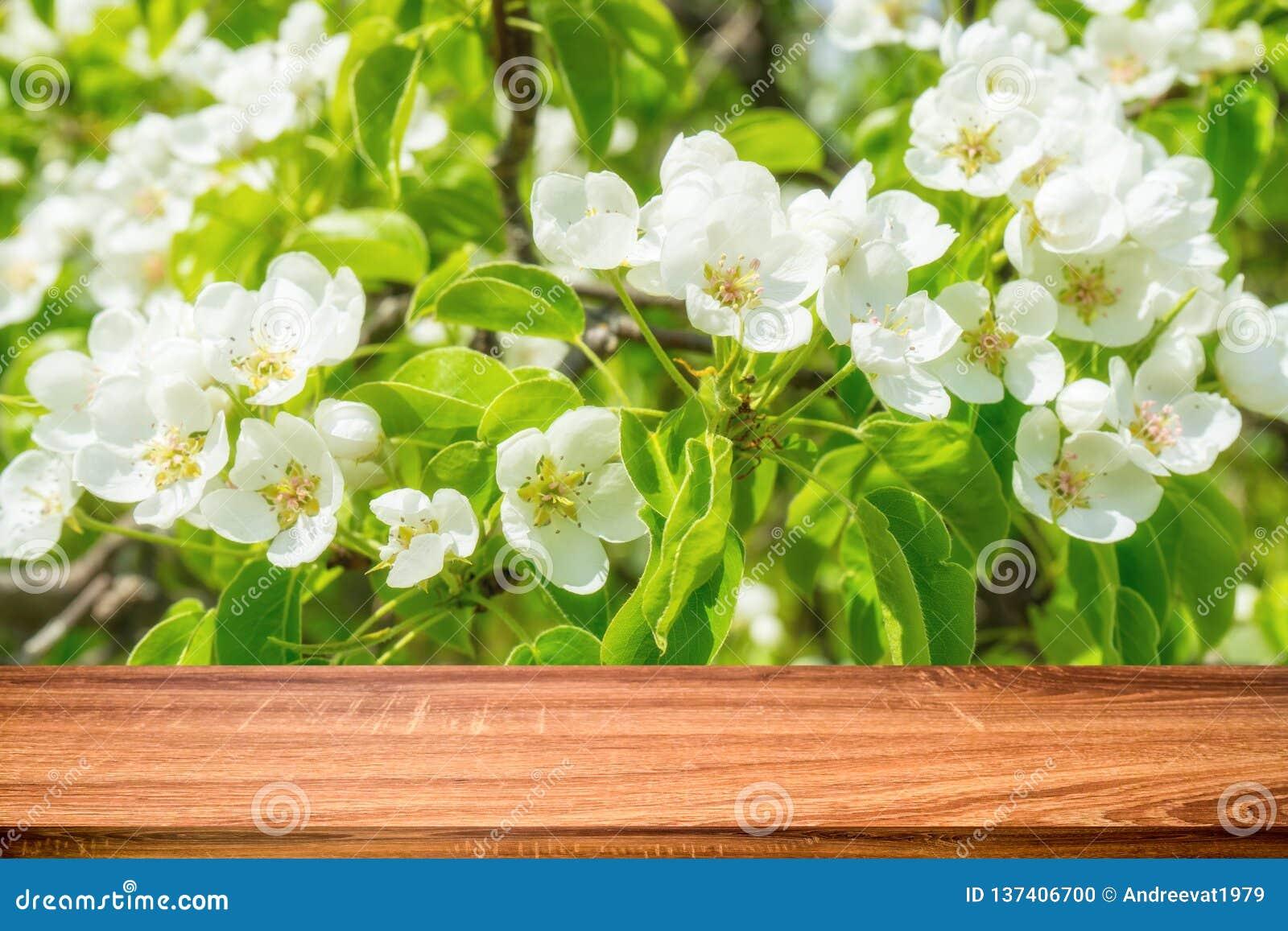 Tabela de madeira vazia com fundo da mola da árvore de maçã selvagem de florescência Pode ser usado para o produto da exposição o
