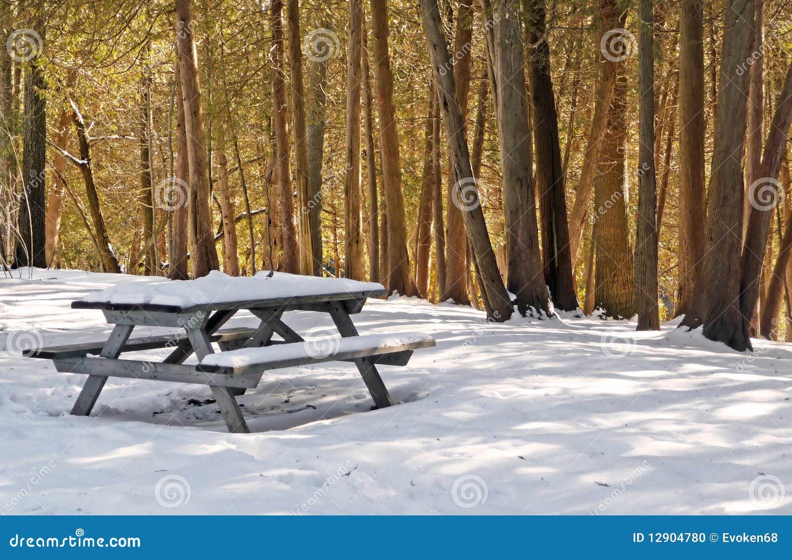 Tabela de piquenique do inverno com cedros sunlit