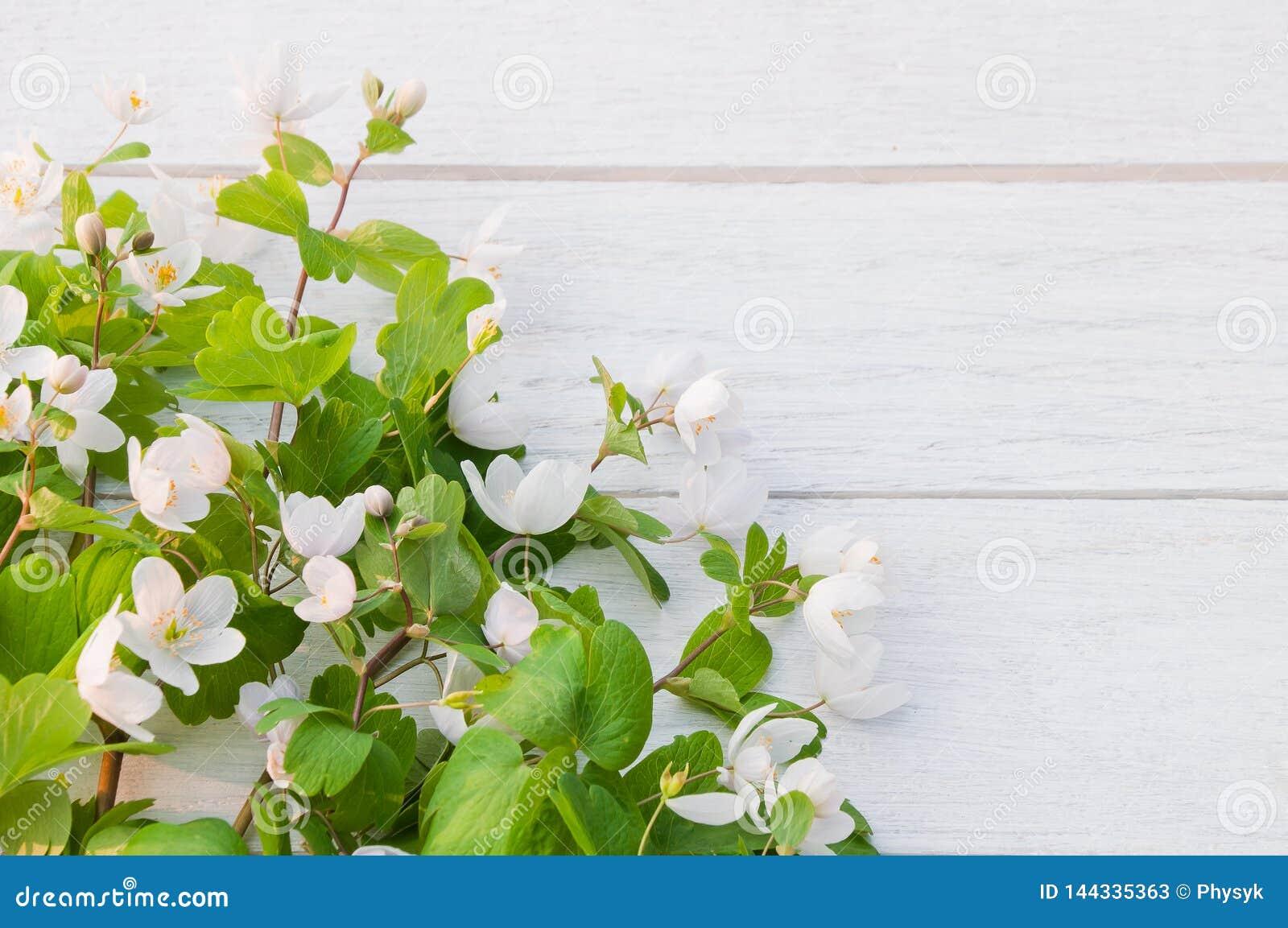 Tabladel woodendel whitedel adel ondel thalictroidesde Isopyrumdel flowersdel forestdel whitede BeautifulÂ