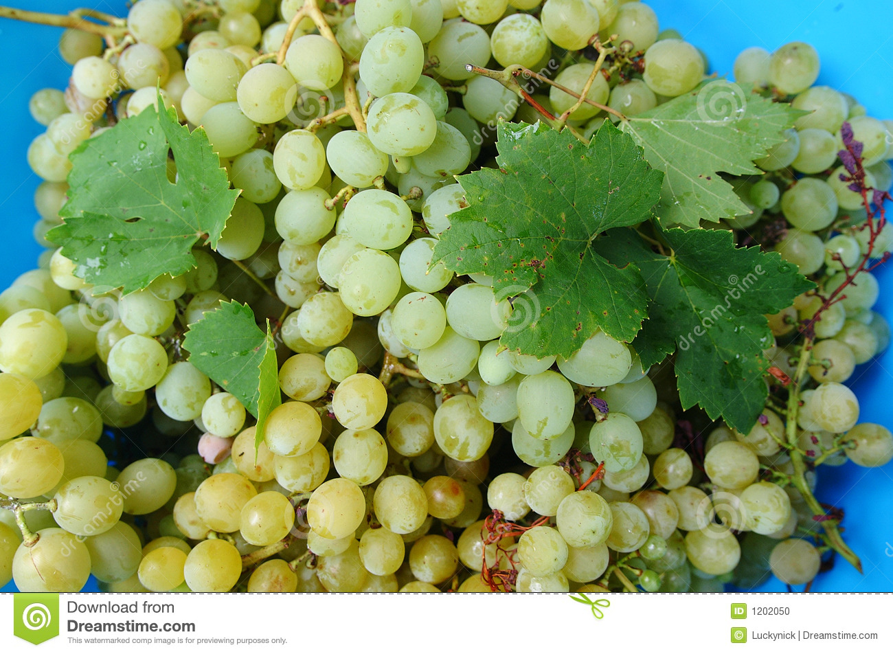 Table grapes and leaves
