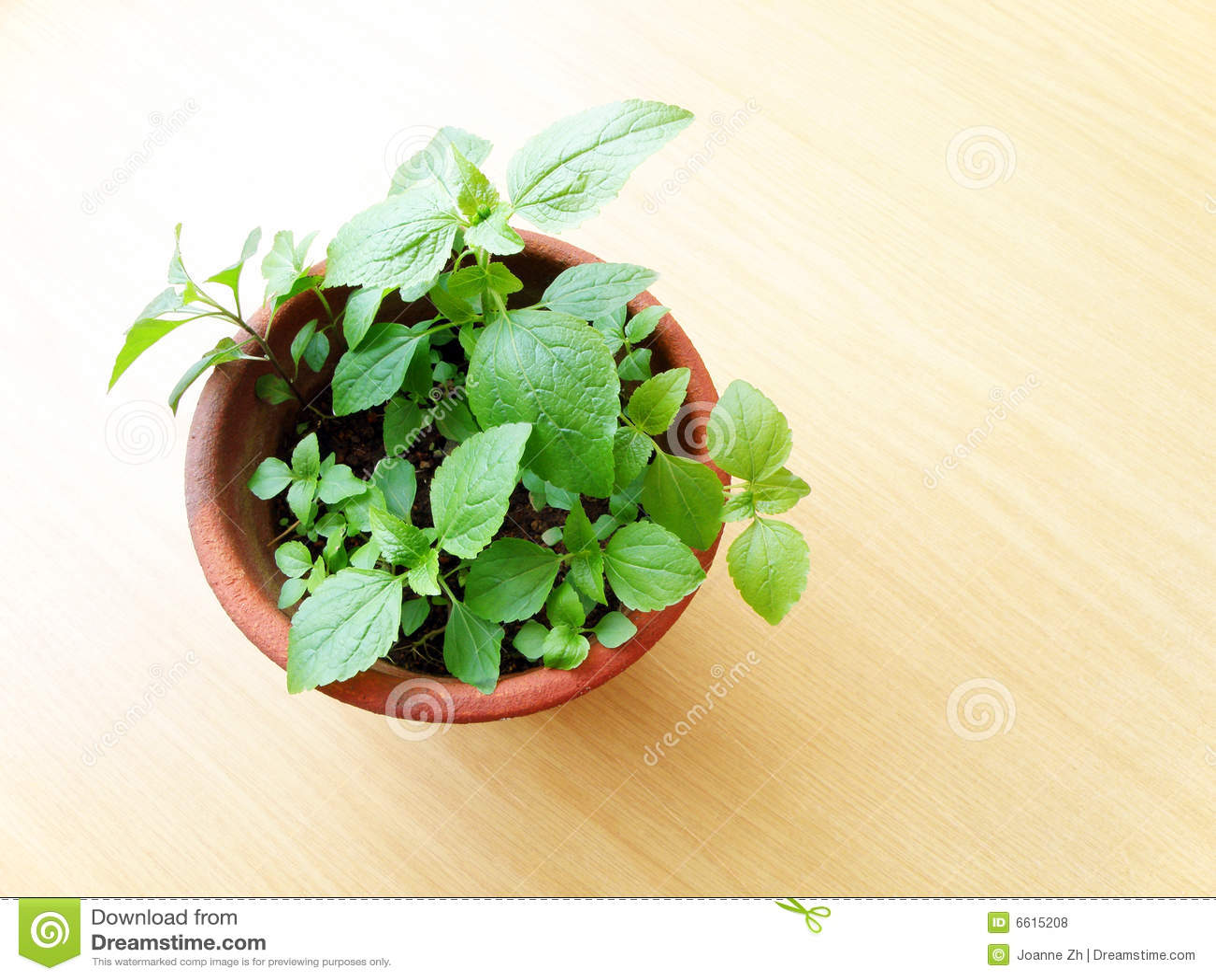 Table mise en pot de plante verte en bois photos libres de - Table plante ...