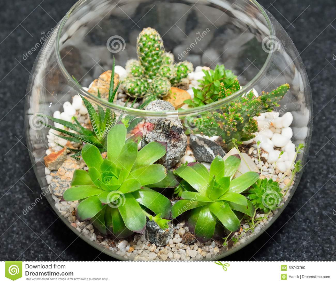 Table Top Plant Decorative Garden Stock Photo Image Of