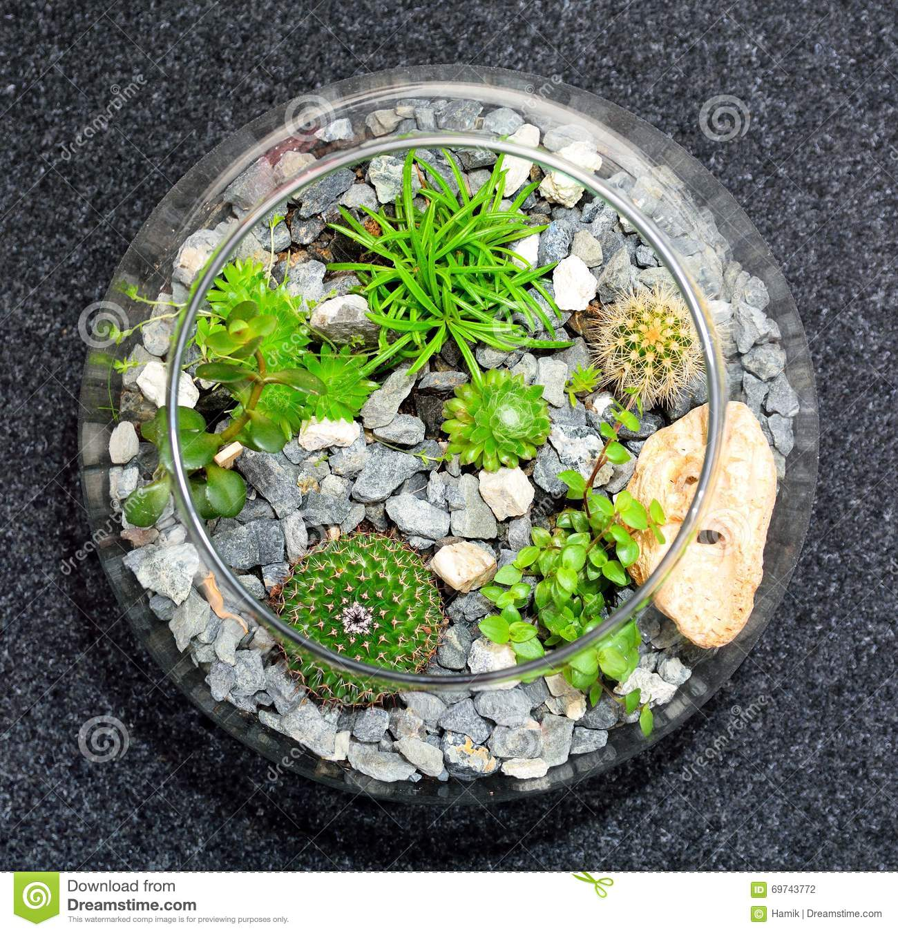 Table Top Plant Decorative Garden Stock Photo Image