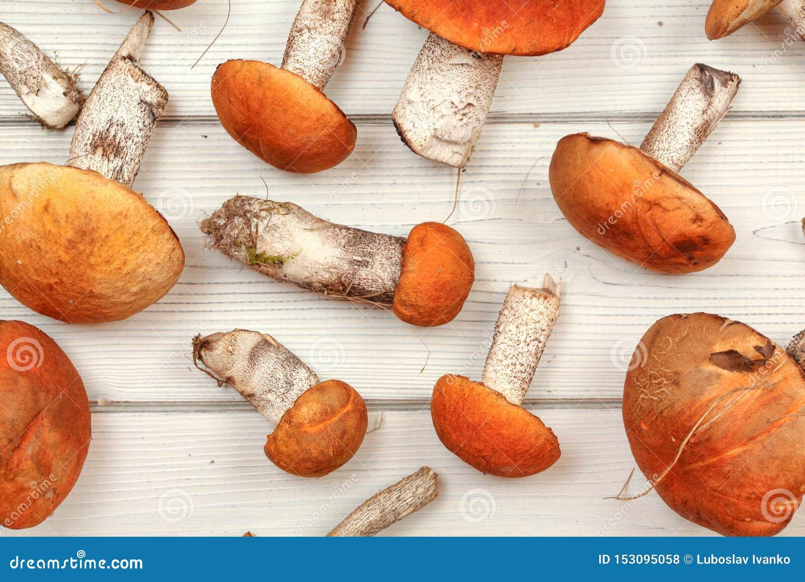 Tabletop foto - nya skogchampinjoner, Röd-korkad aurantiacum/albostipitatum för scaberstjälkLeccinum, på vita träbräden