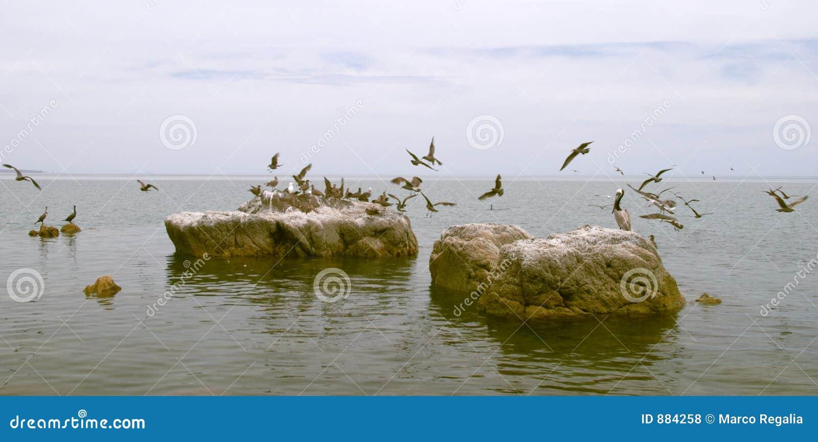 Tabunowi ptaki