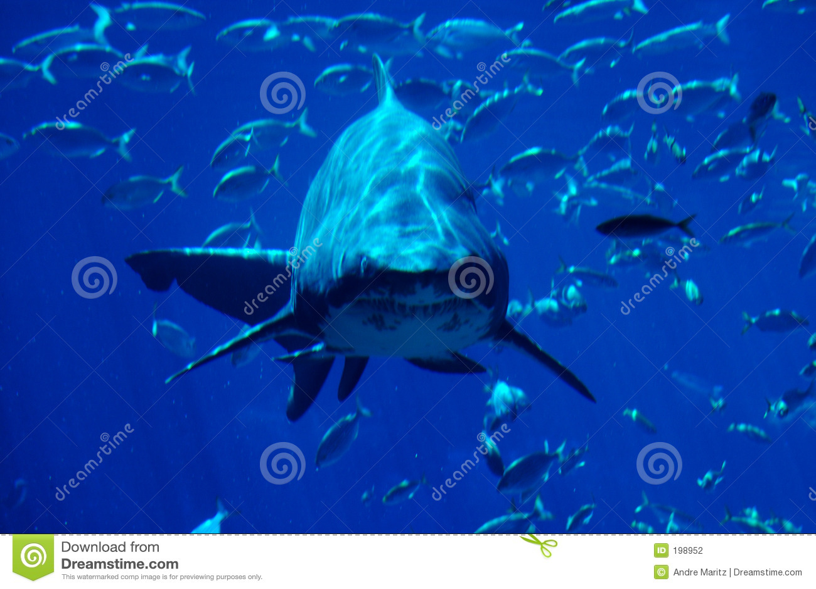 Tache #2 de requin