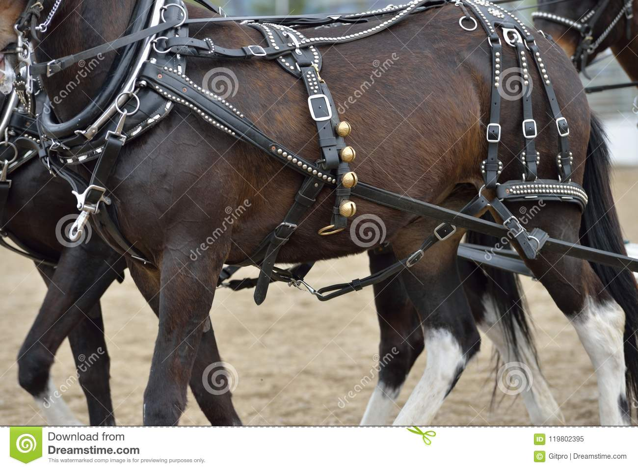 Tack Equipment Of Draft Horses Stock Image Image Of Industry Side 119802395