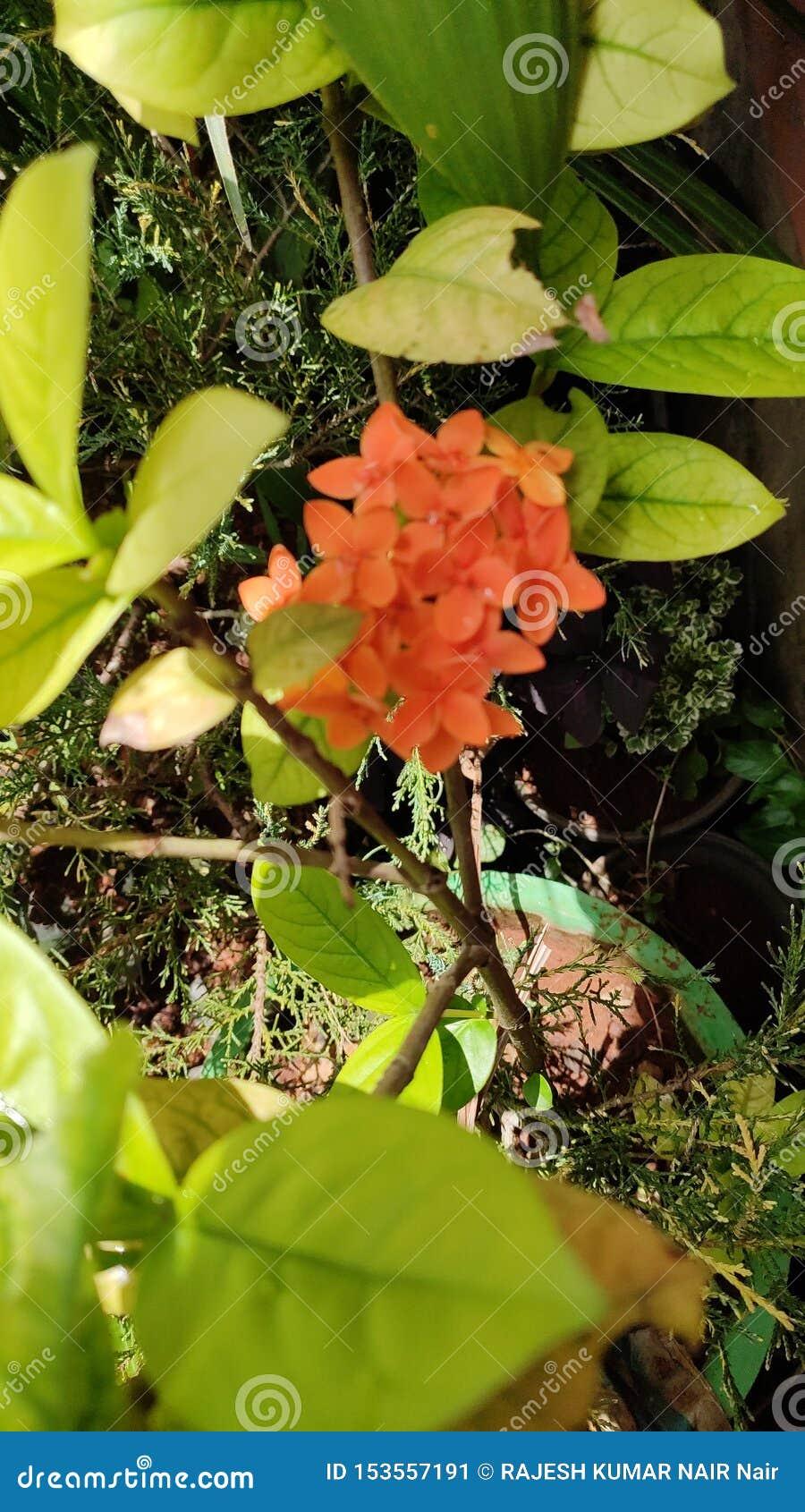 Tacka dig så don& x27, hur härligt jorden är med blommor och; t missa några relevanta särdrag för denna positionsth