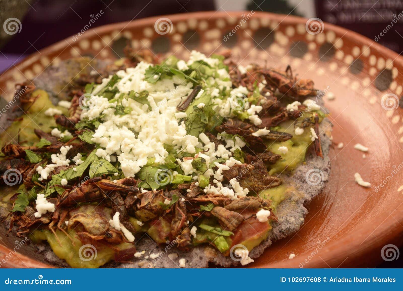 Taco mexicain de sauterelle, pain grillé comestible de tortilla d insecte fait avec du maïs bleu et rempli de guacamole, de froma