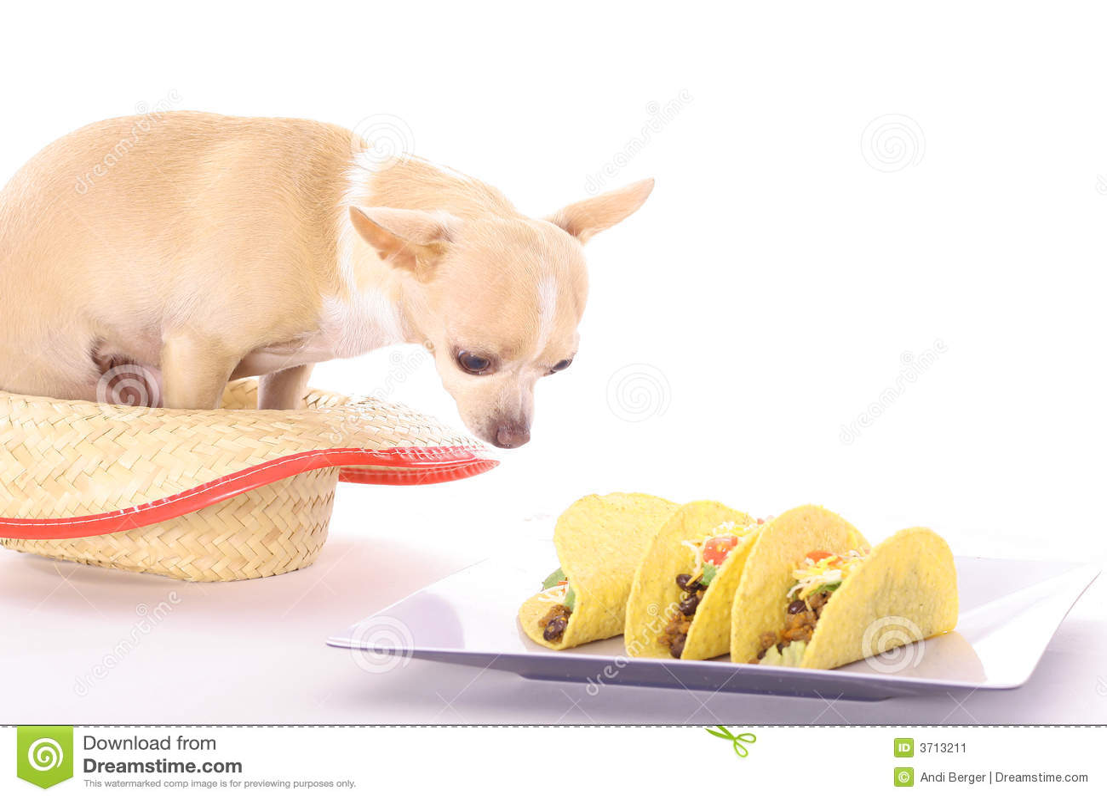 Tacos chihuahua