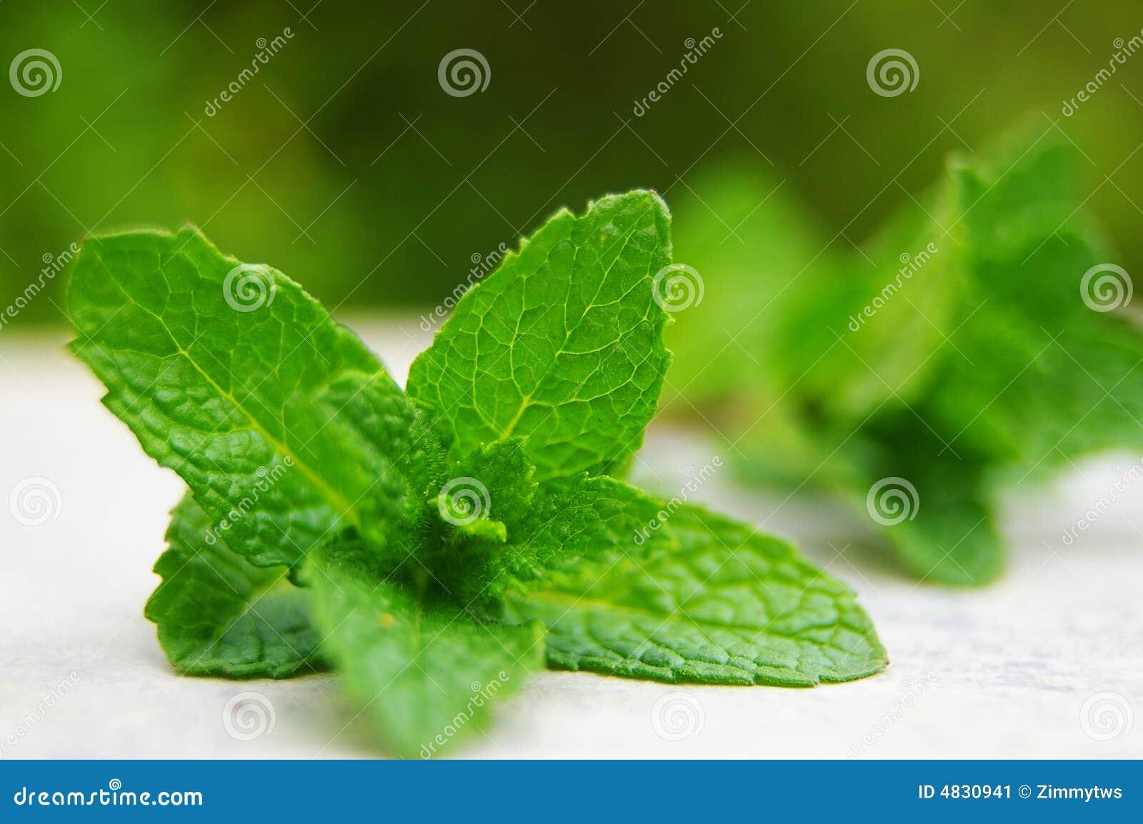 Tadellose Blätter