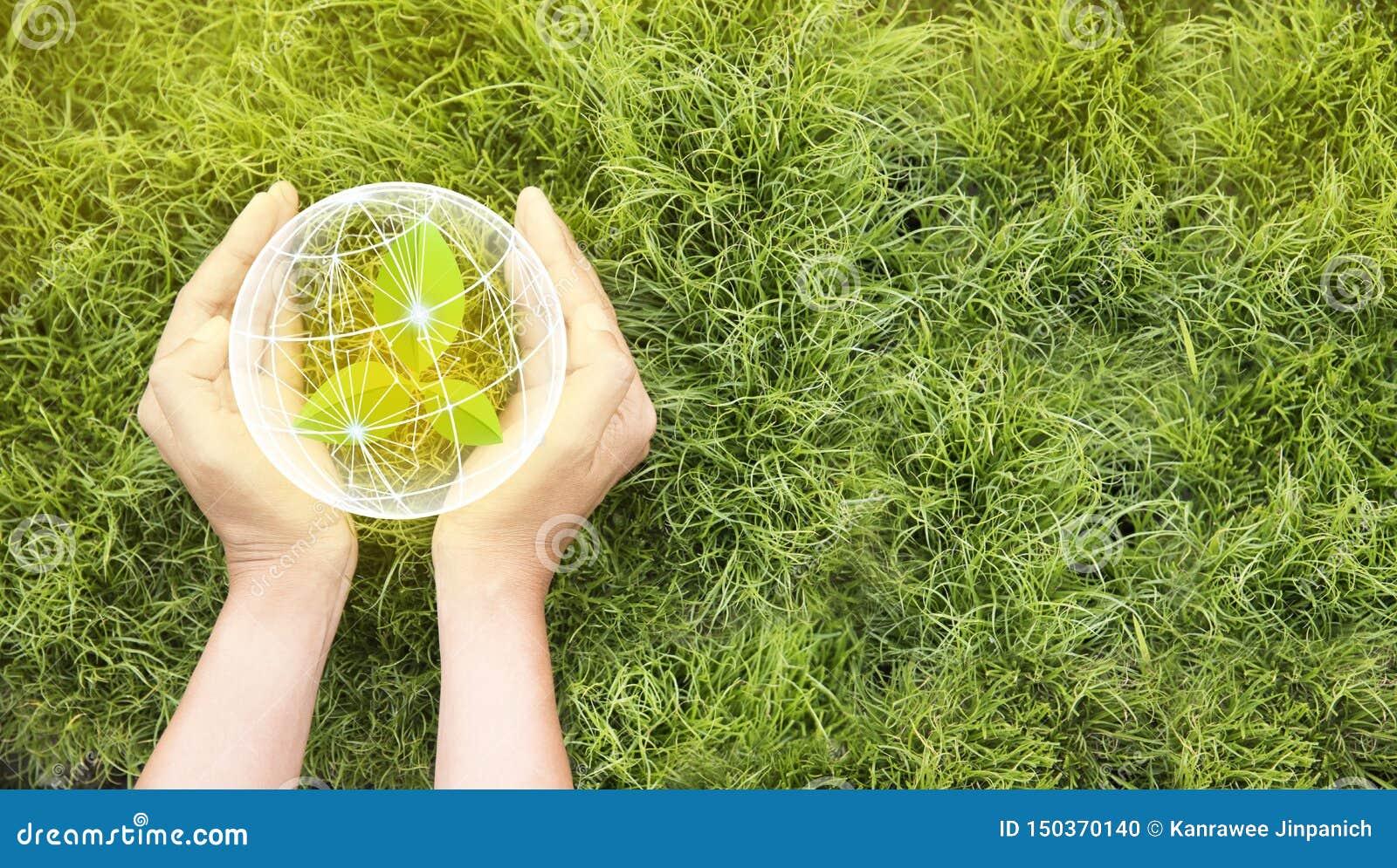 Tag der Erde in den H?nden von den B?umen, die S?mlinge wachsen Sicherungswelt- und Innovationskonzept, Mädchenholdingpflänzchen