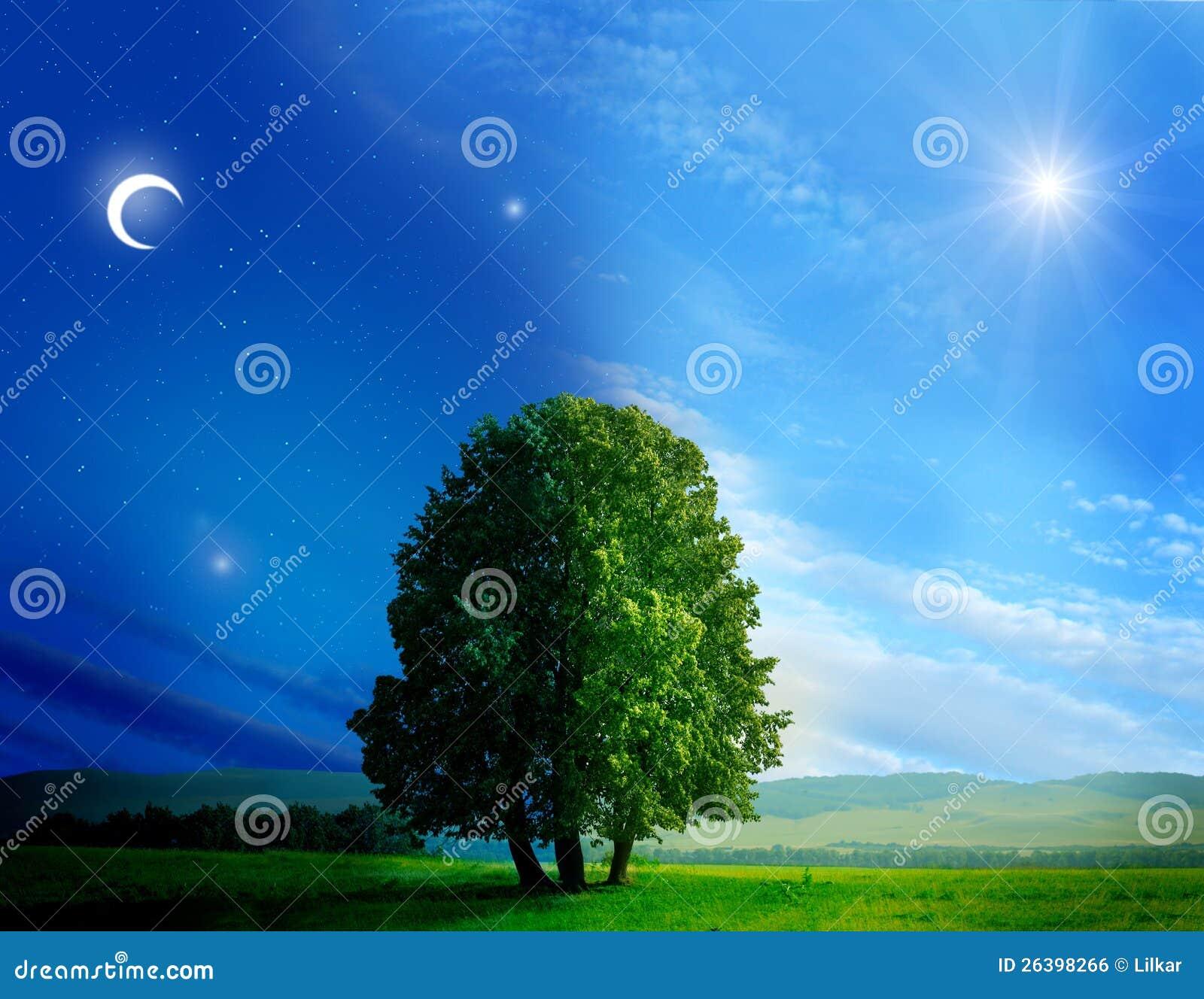Tag und Nacht Baum