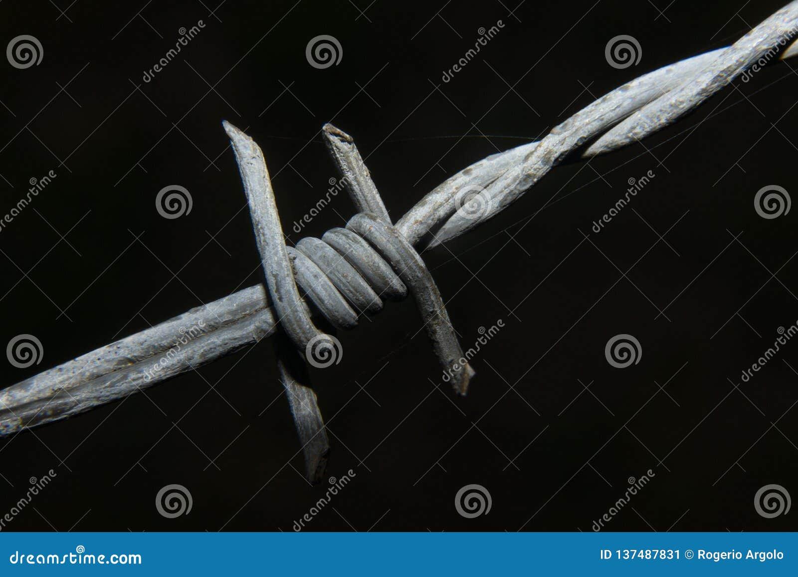 Taggtrådmakro med mörk backgroung