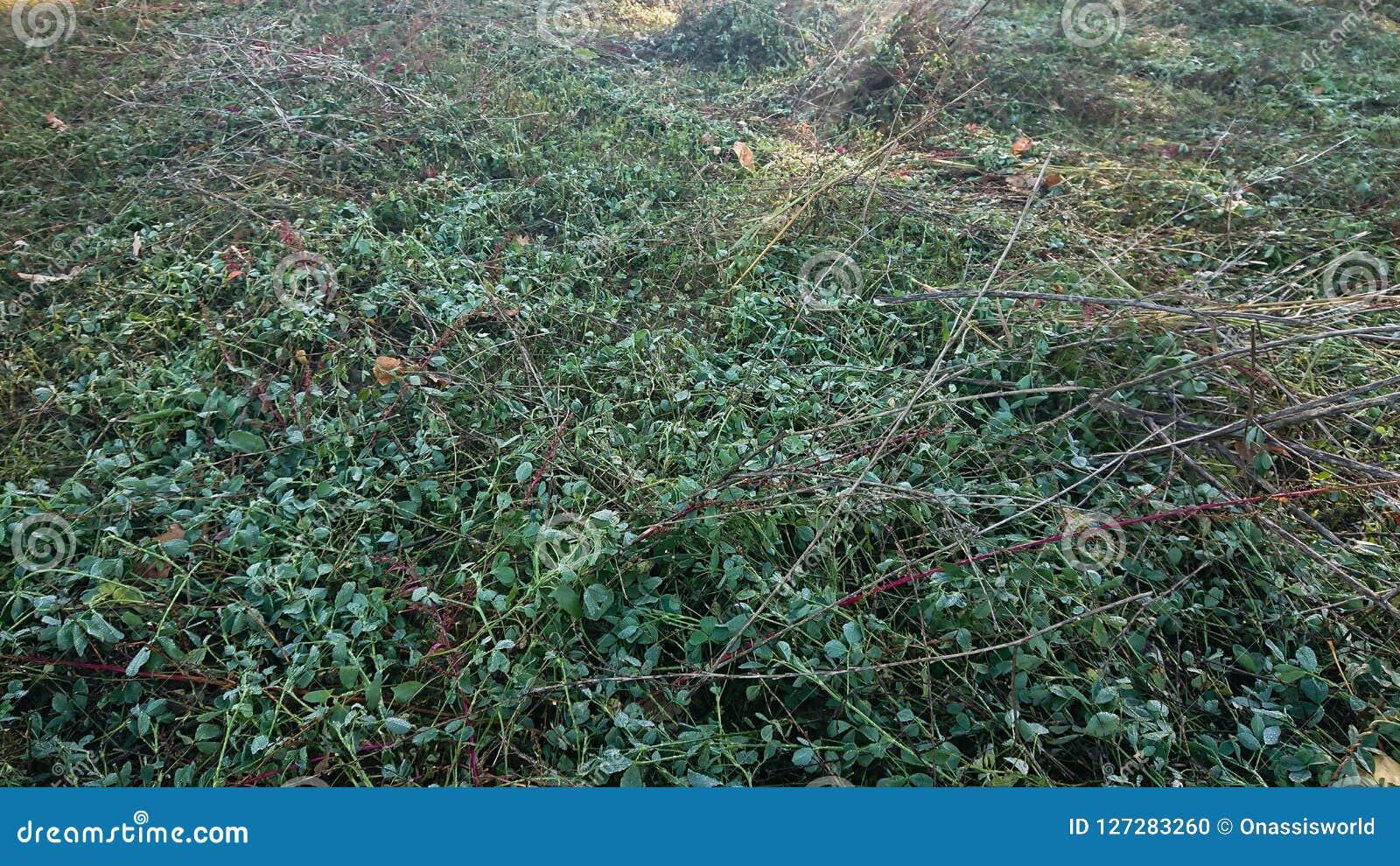 Tagli il campo di erba