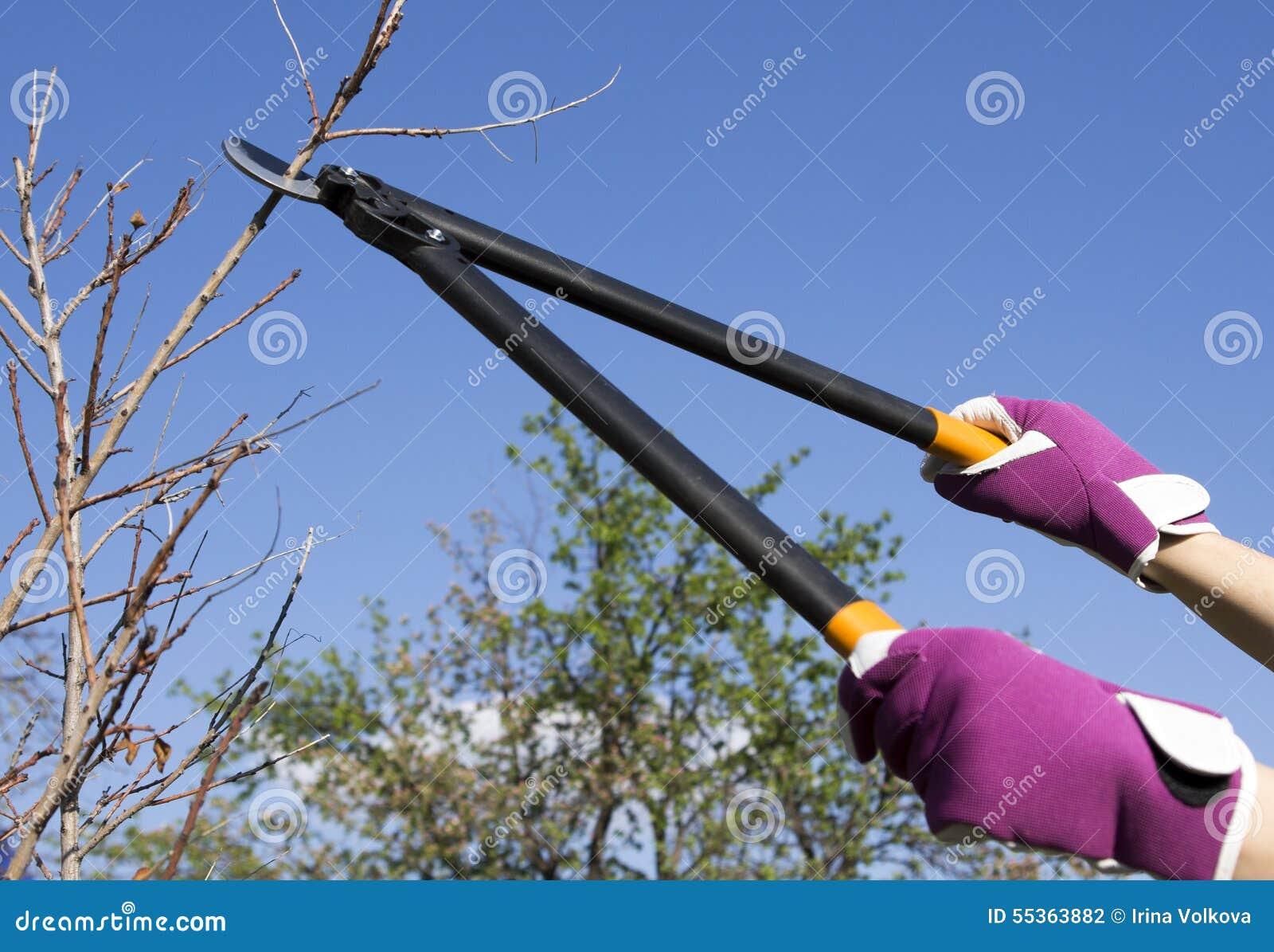 Taglio dell albero in un giardino