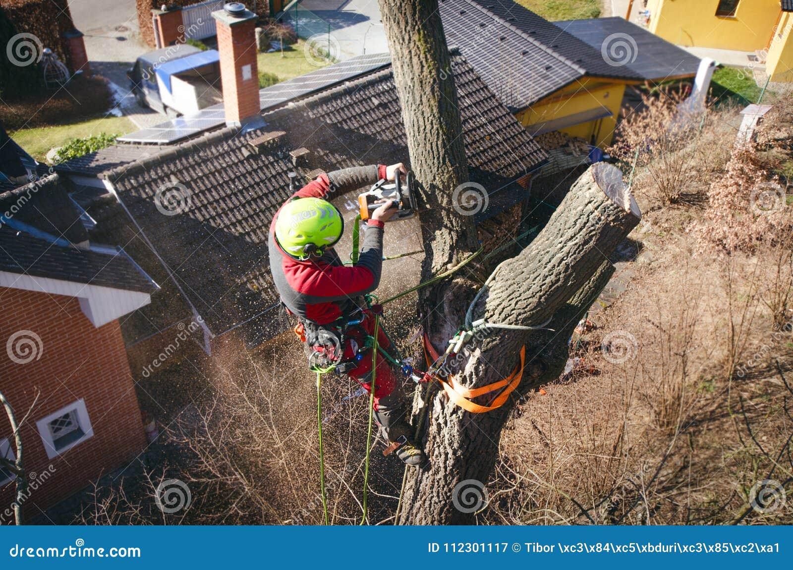 Taglio dell uomo dell arboricoltore rami con la motosega ed il tiro su una terra Il lavoratore con il casco che lavora all altezz