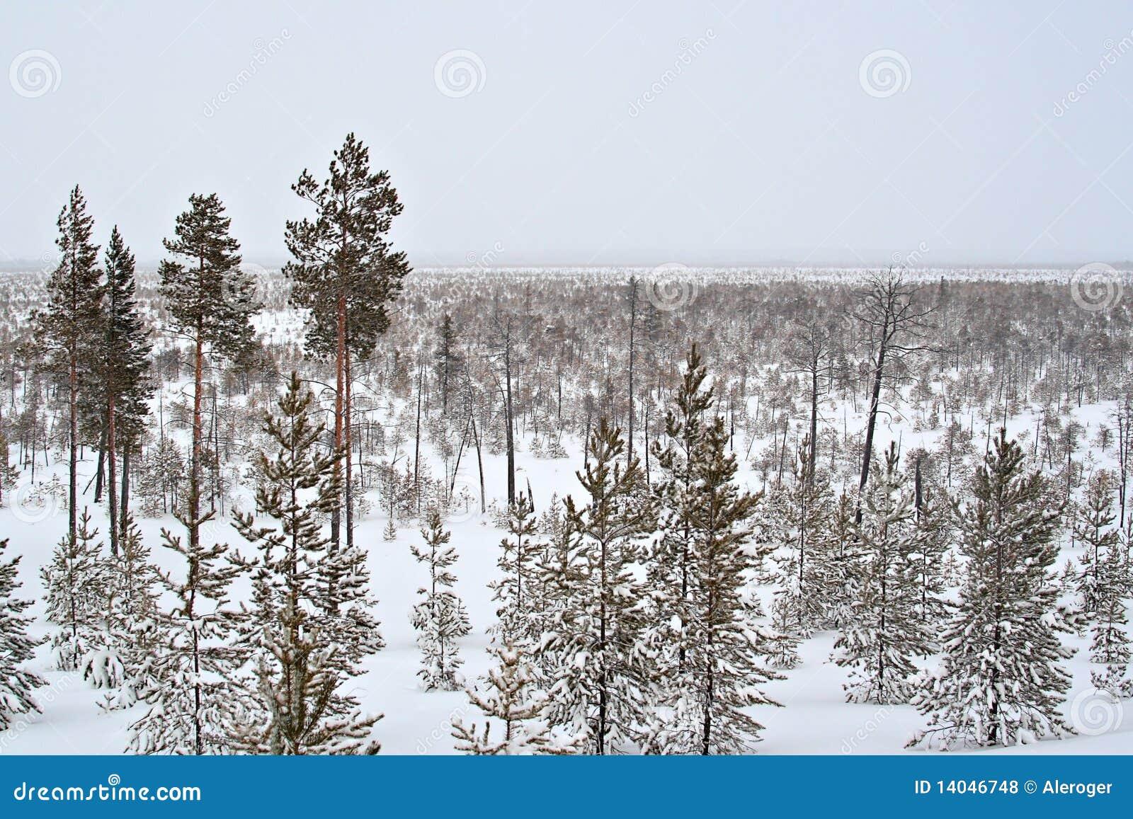 wilderness wallpaper winter nature